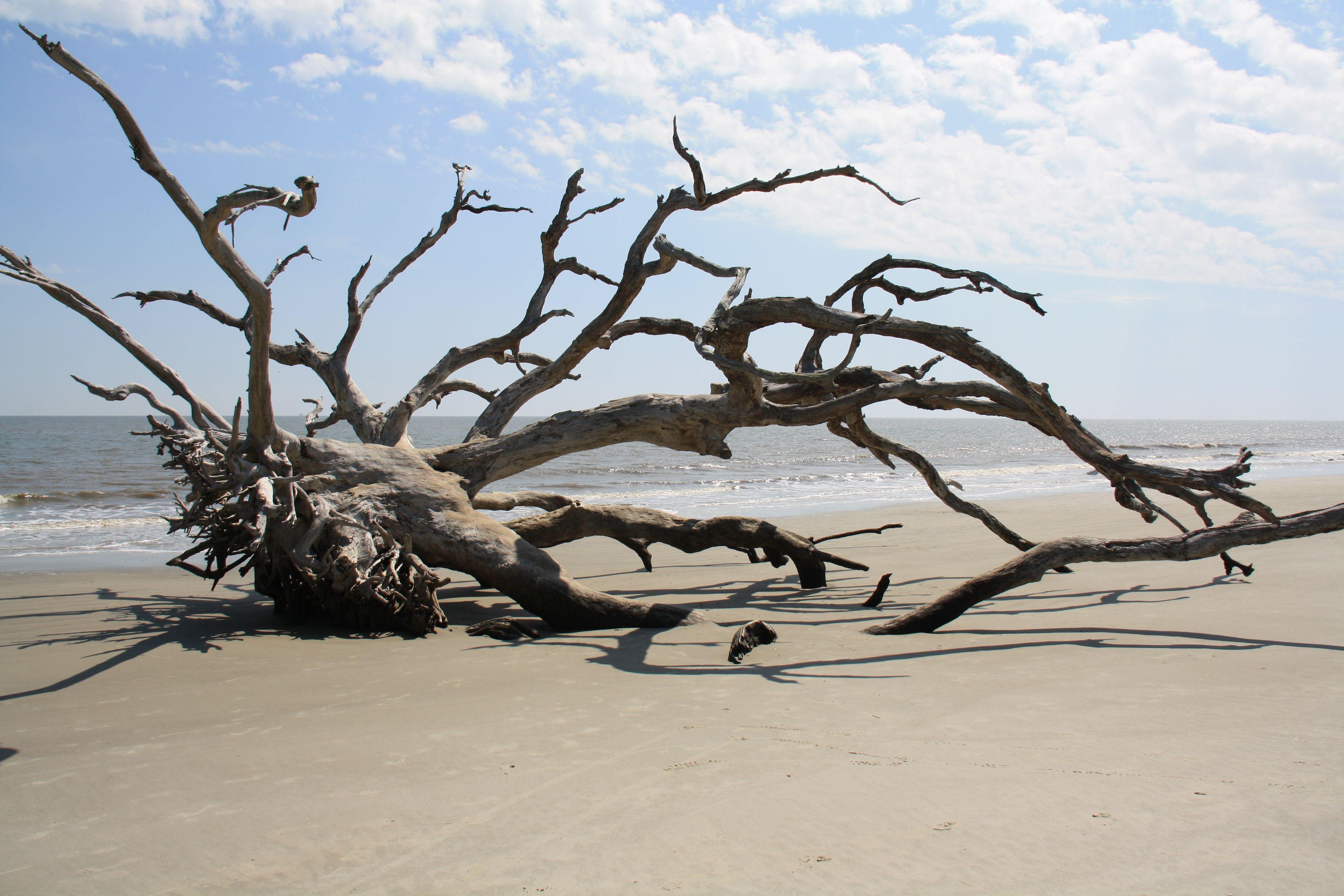 Driftwood beach scene photo