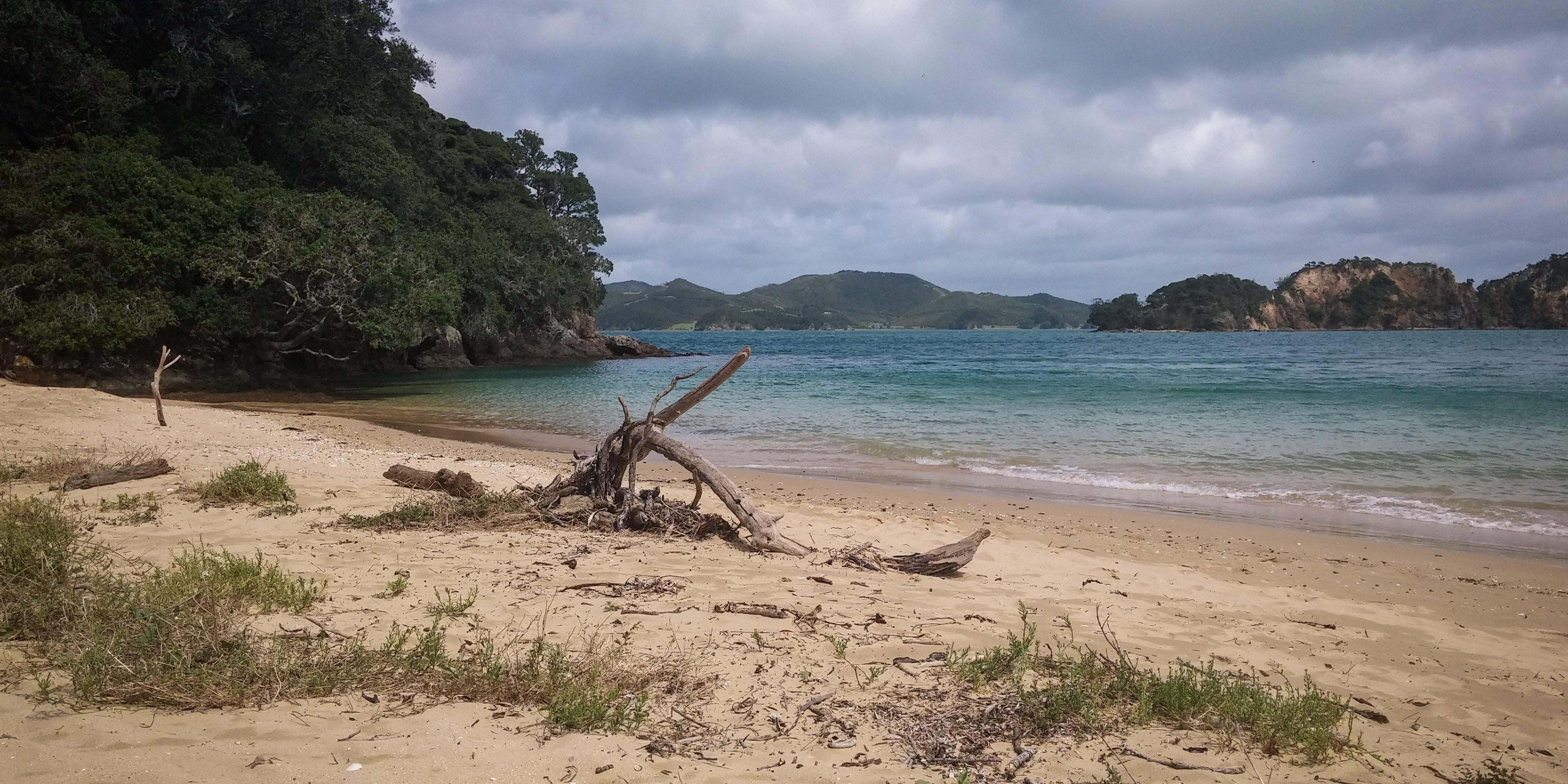 Driftwood on shore photo