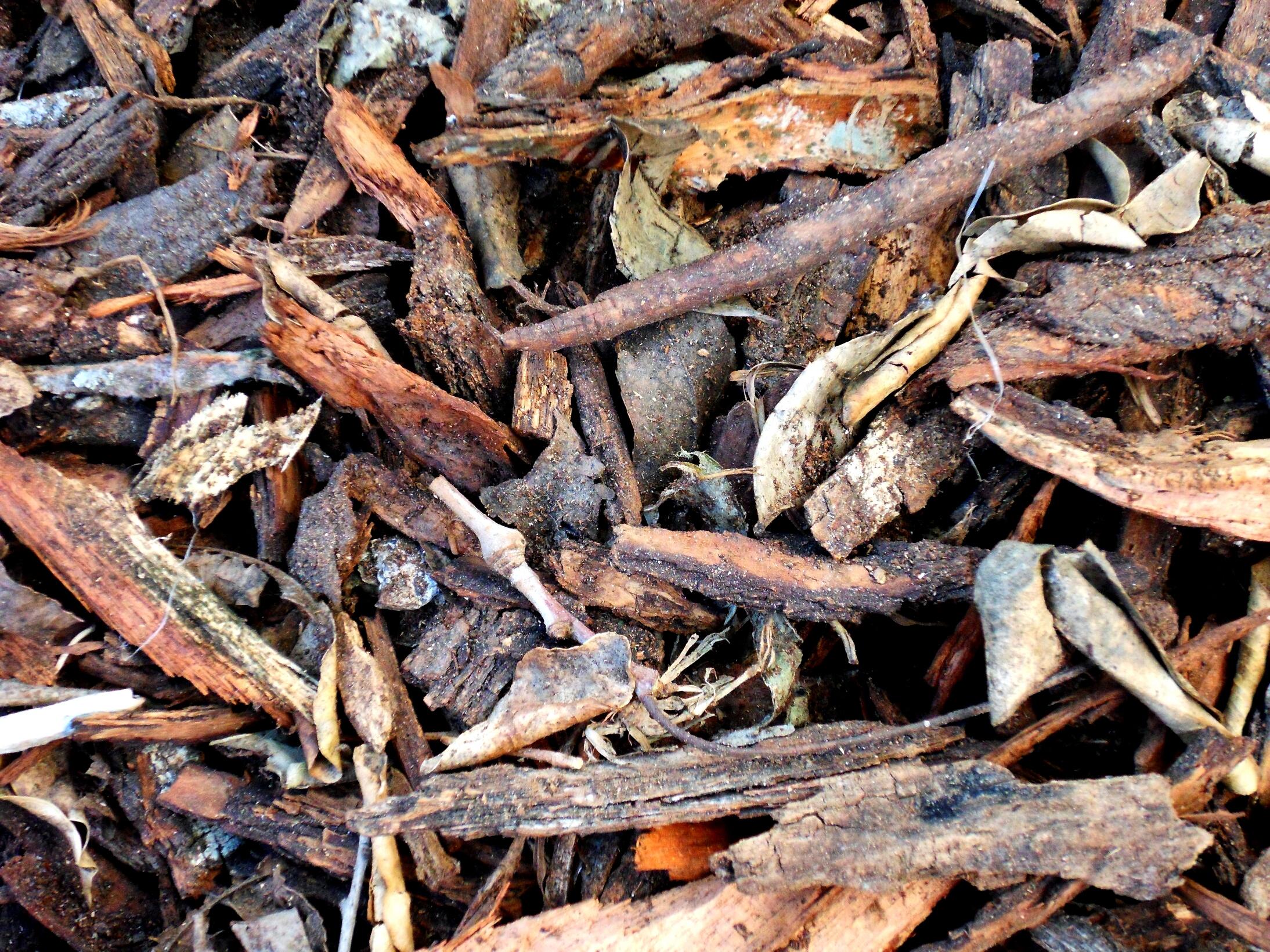 Driftwood texture photo