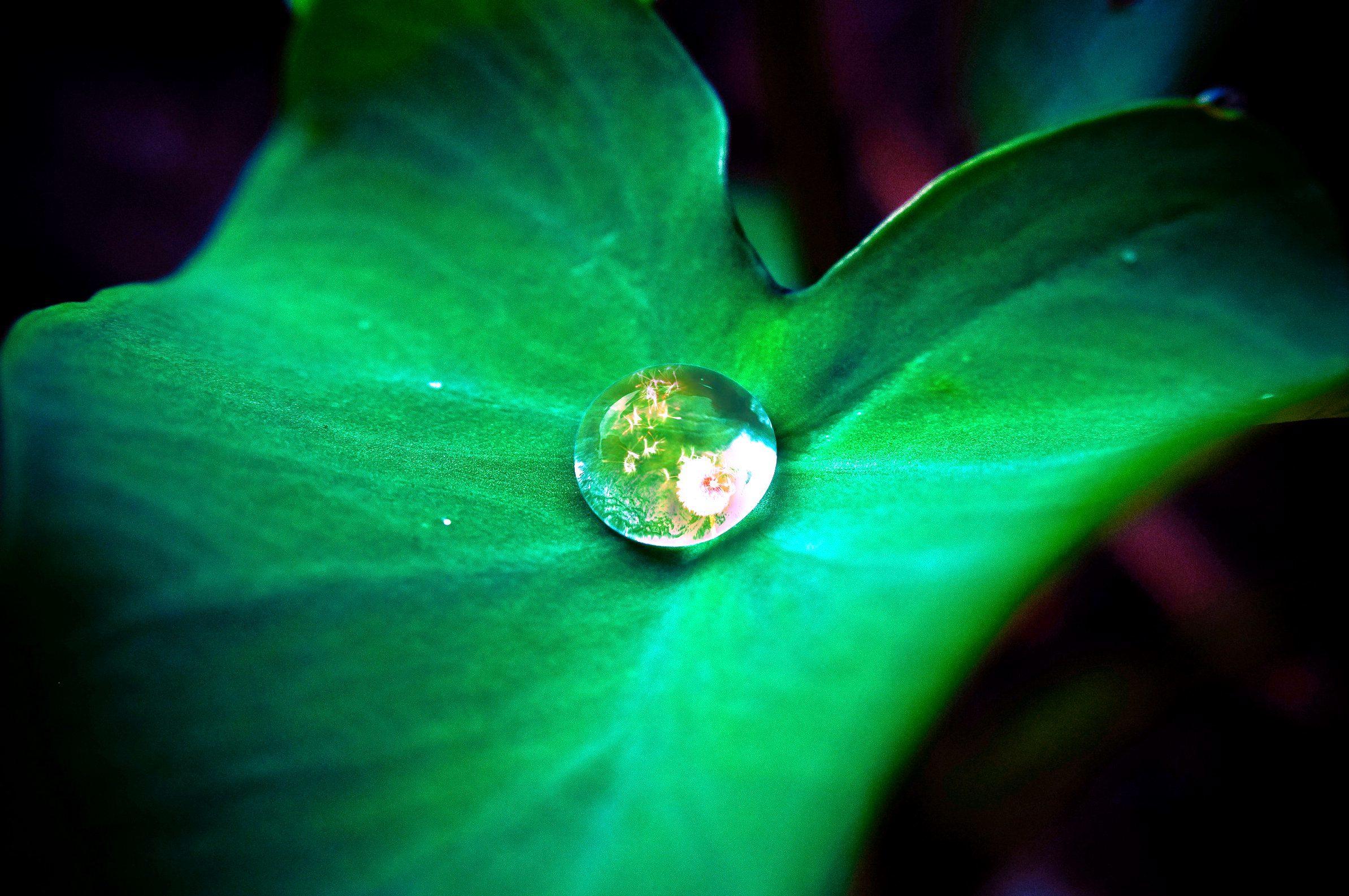 Droplet on leaf photo