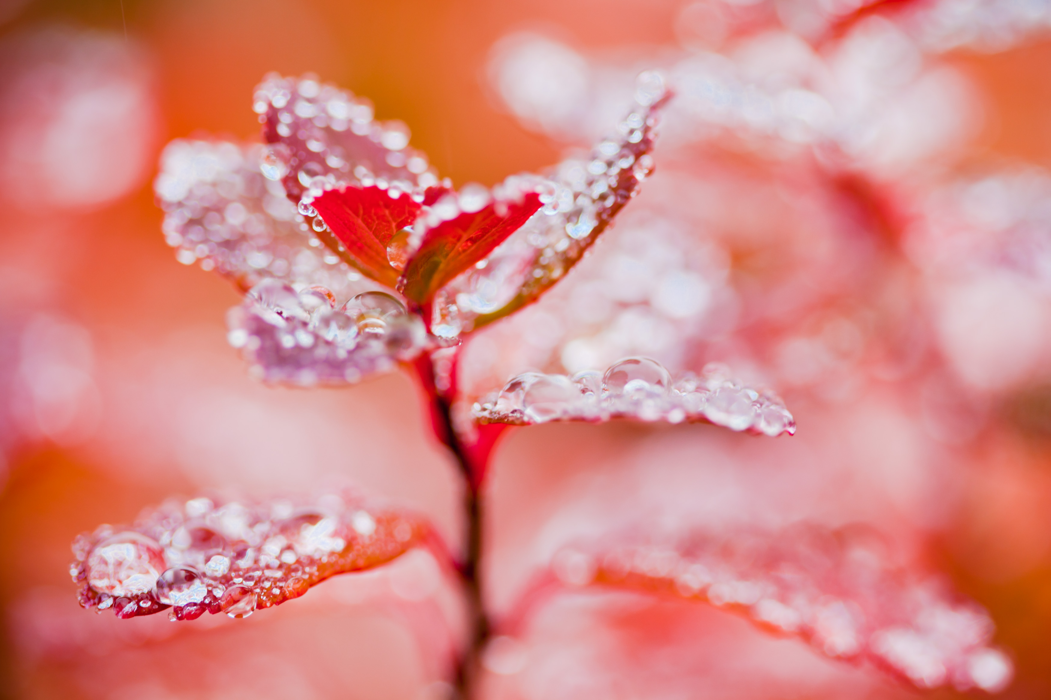 Droplets on autumn leaves photo