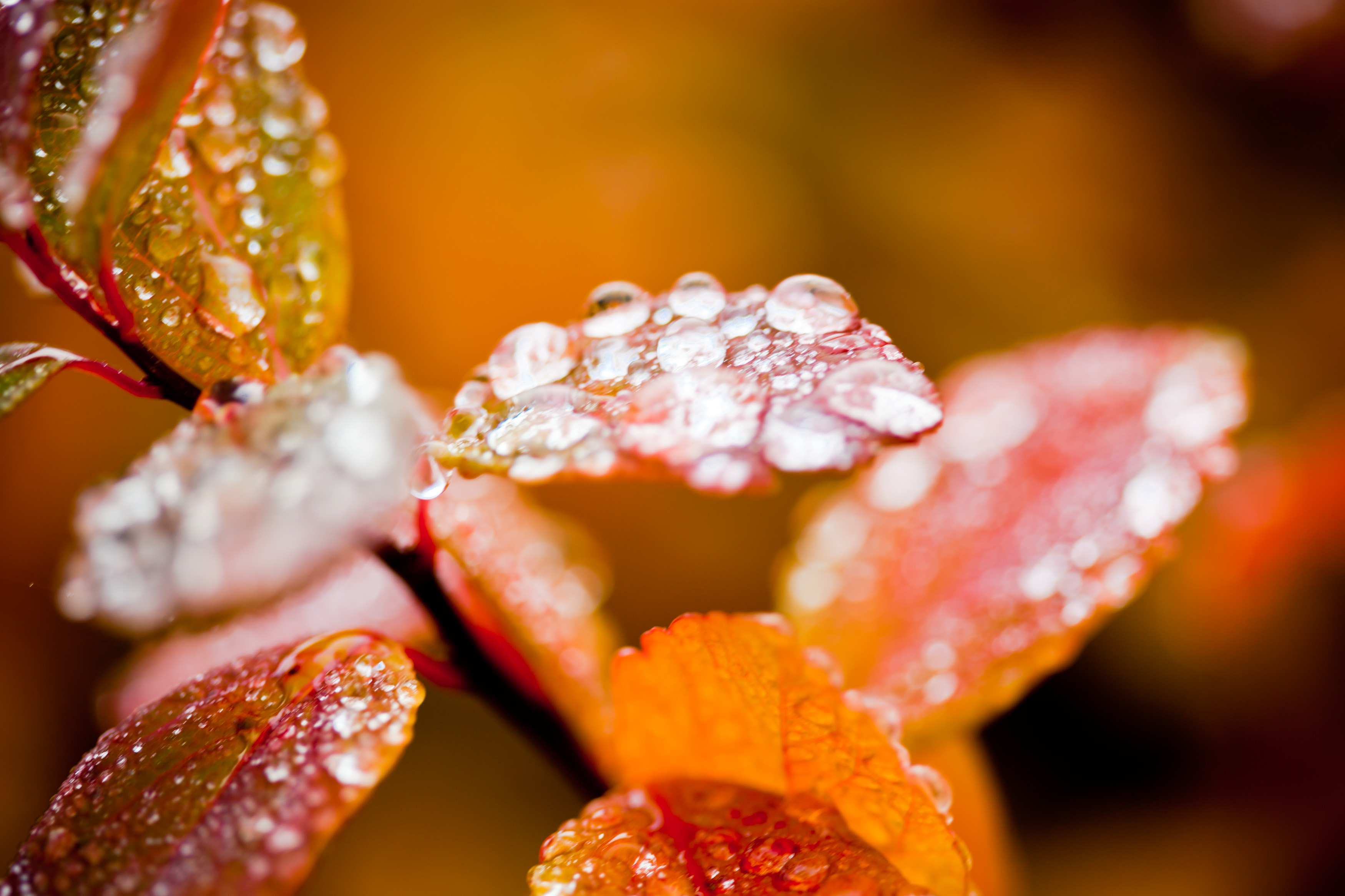 Droplets on foliage in autumn photo