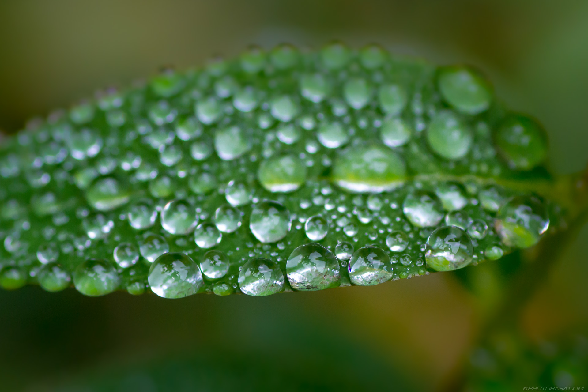 loads of tiny water droplets on leaf - Photorasa Free HD Photos
