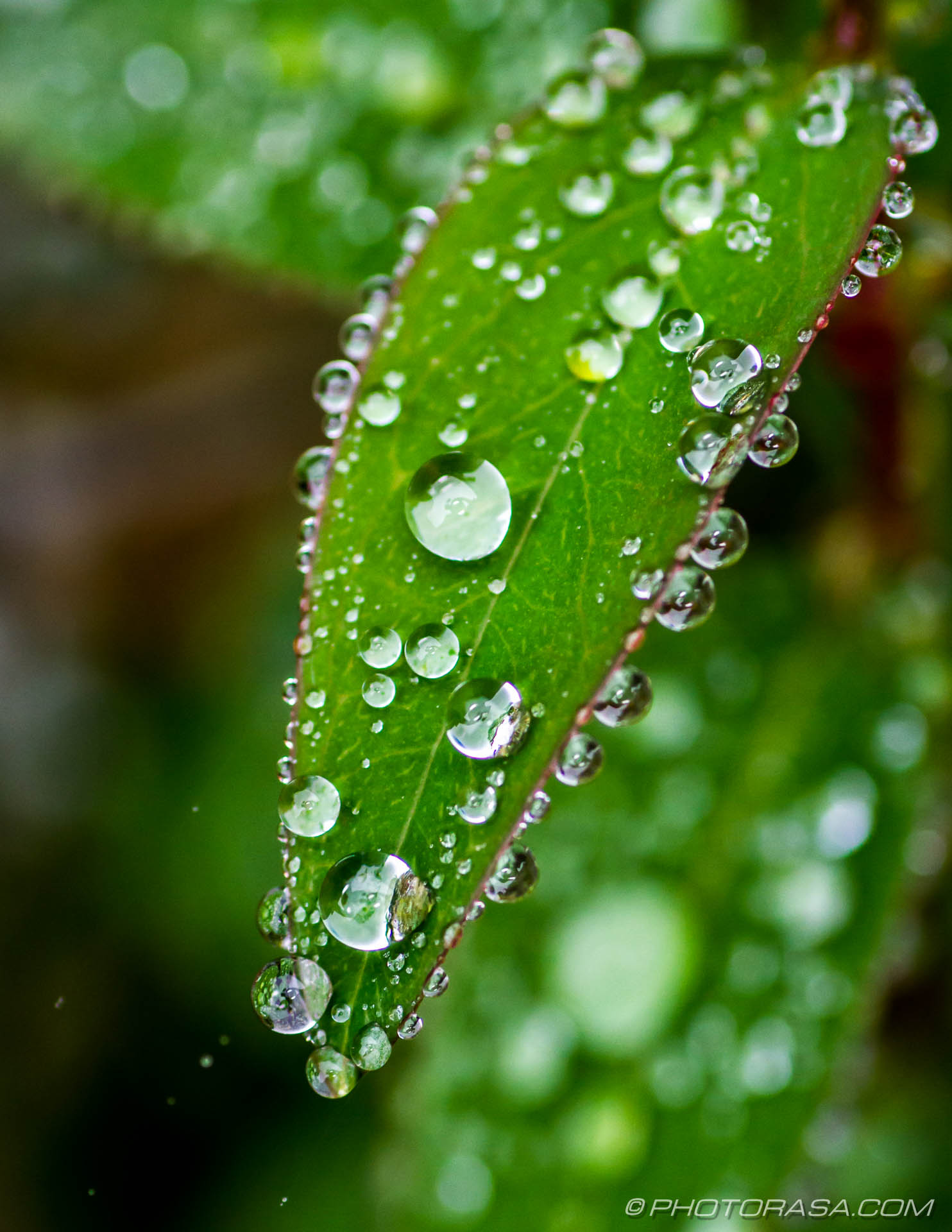 tiny water droplets on small leaf - Photorasa Free HD Photos