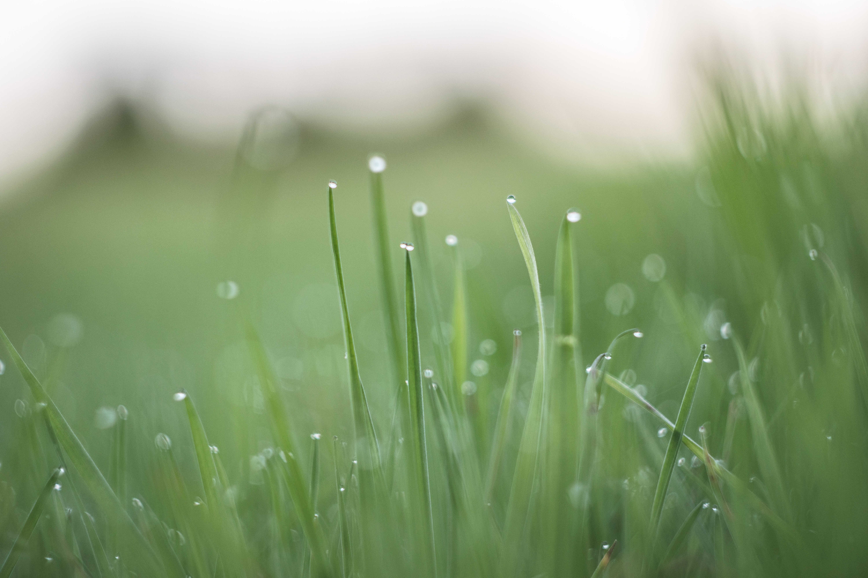 Drops, Green, Grass, Droplets, HQ Photo