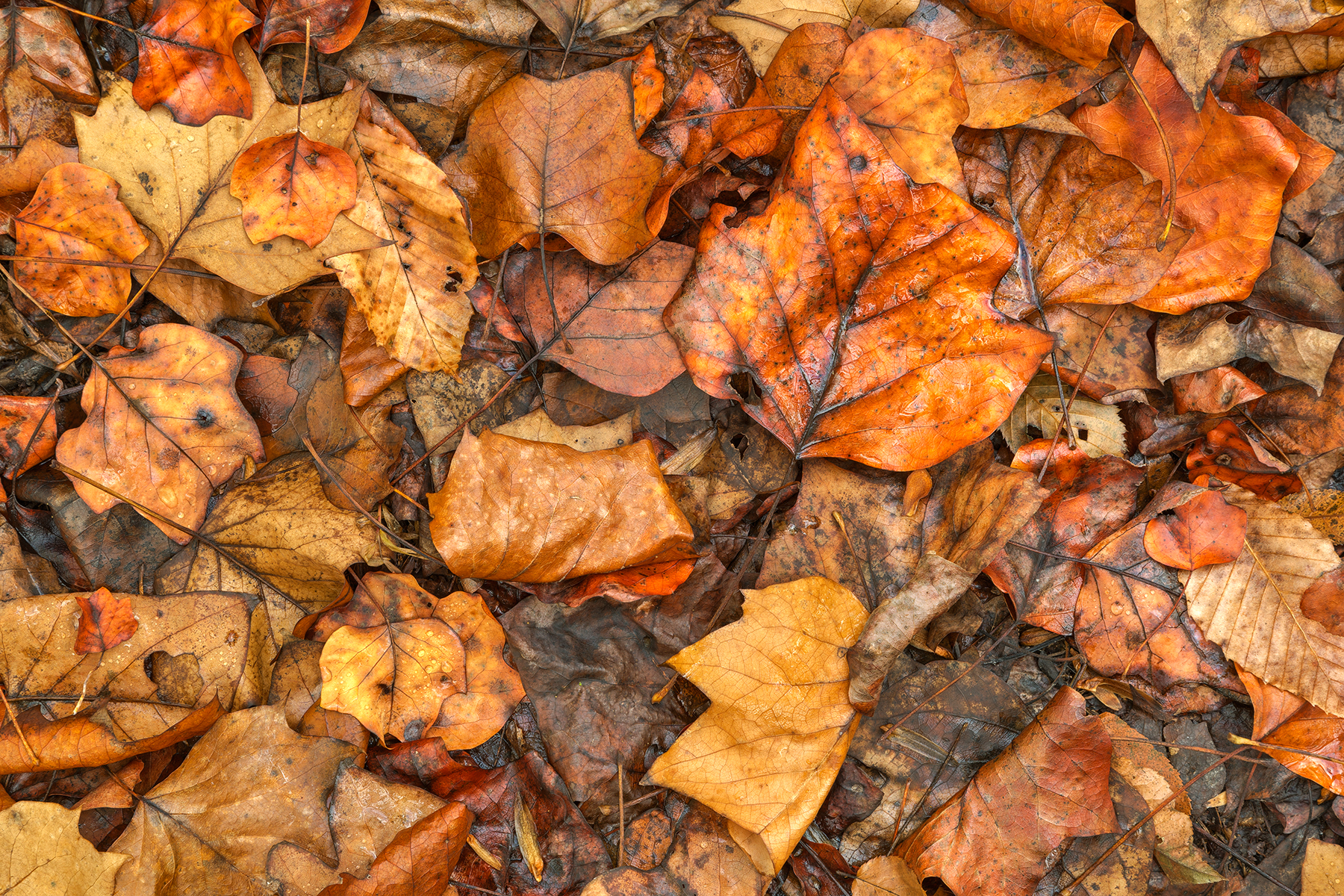 Drowning autumn decay - hdr photo