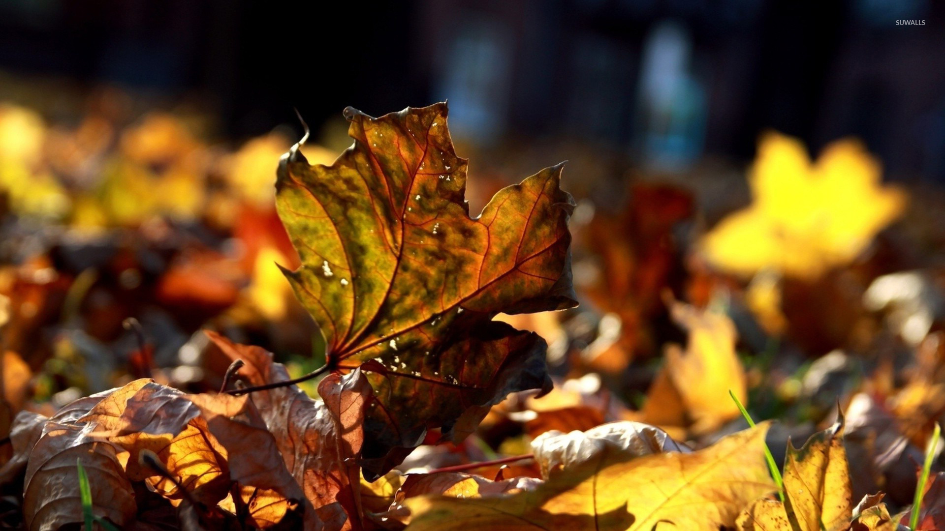 Dry Autumn Leaves wallpaper - Nature wallpapers - #15504