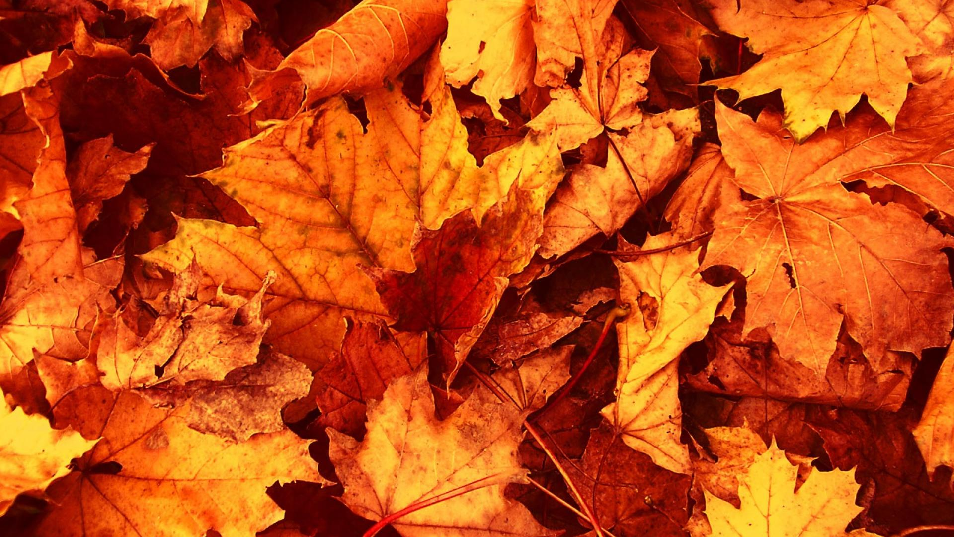 Dried autumn leaves wallpaper | (132870)
