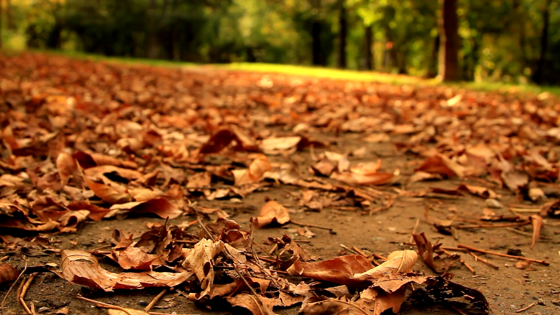 Autumn In The Park, Carpet of Dry Red Leaves, Fall In The City ...