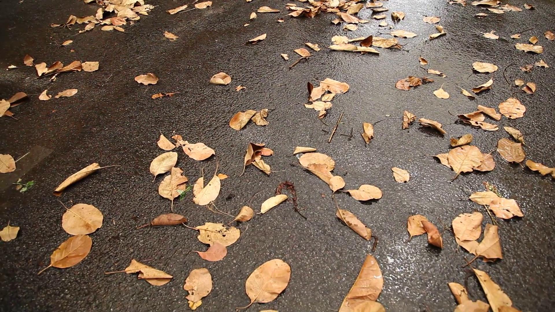 Dry Leaves on wet road Stock Video Footage - Videoblocks
