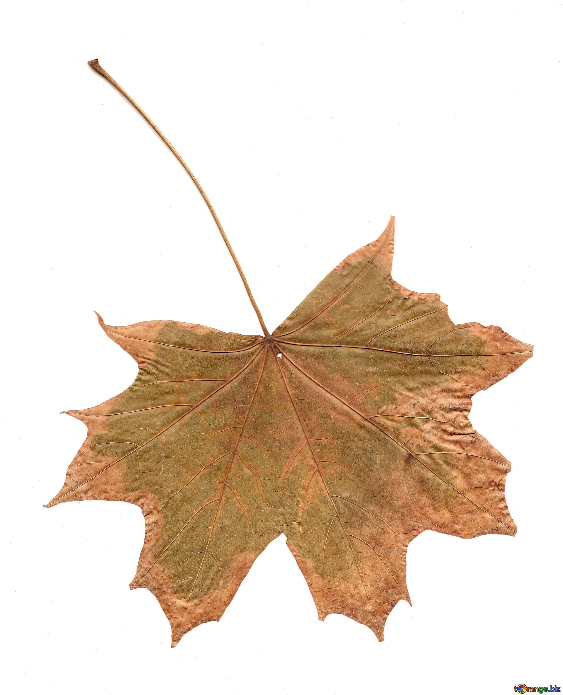 Free photo: Dry Leaves - Nature, Season, Leave - Free