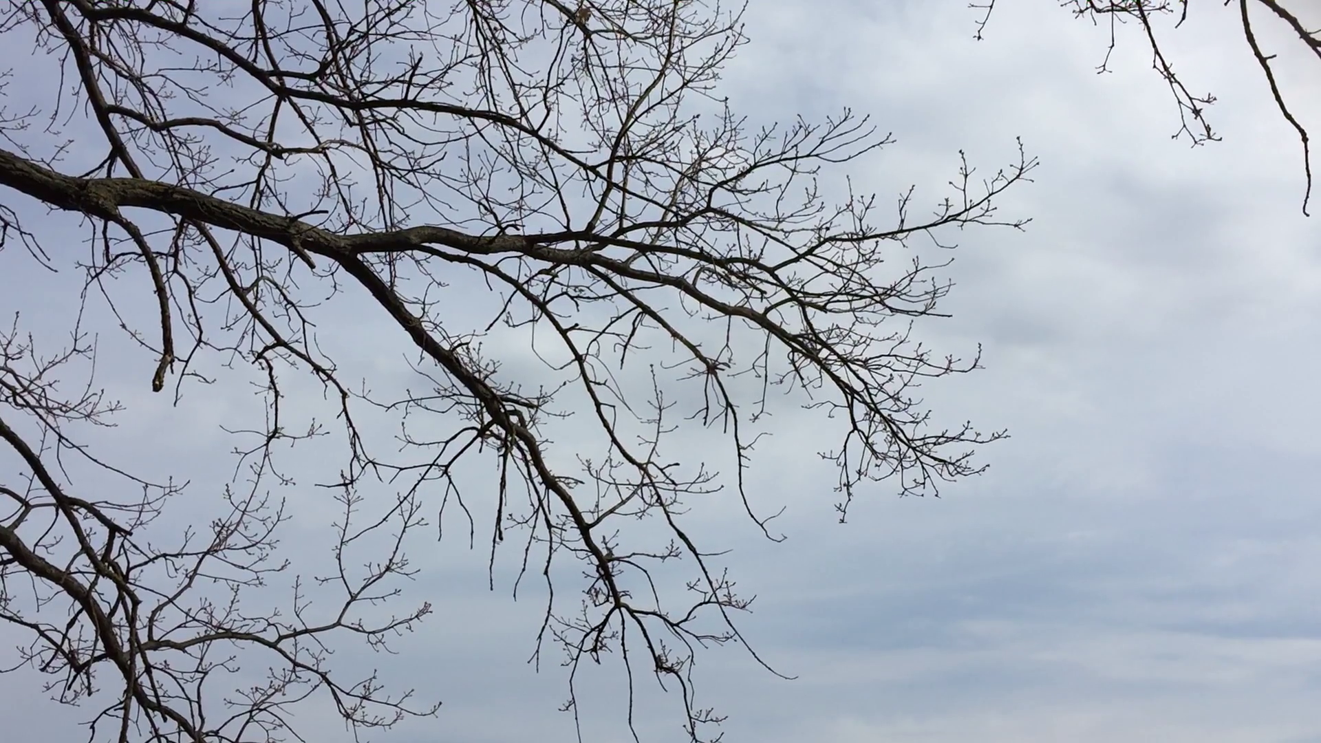 Dry branches of trees without leaves. Nature sky forest against the ...