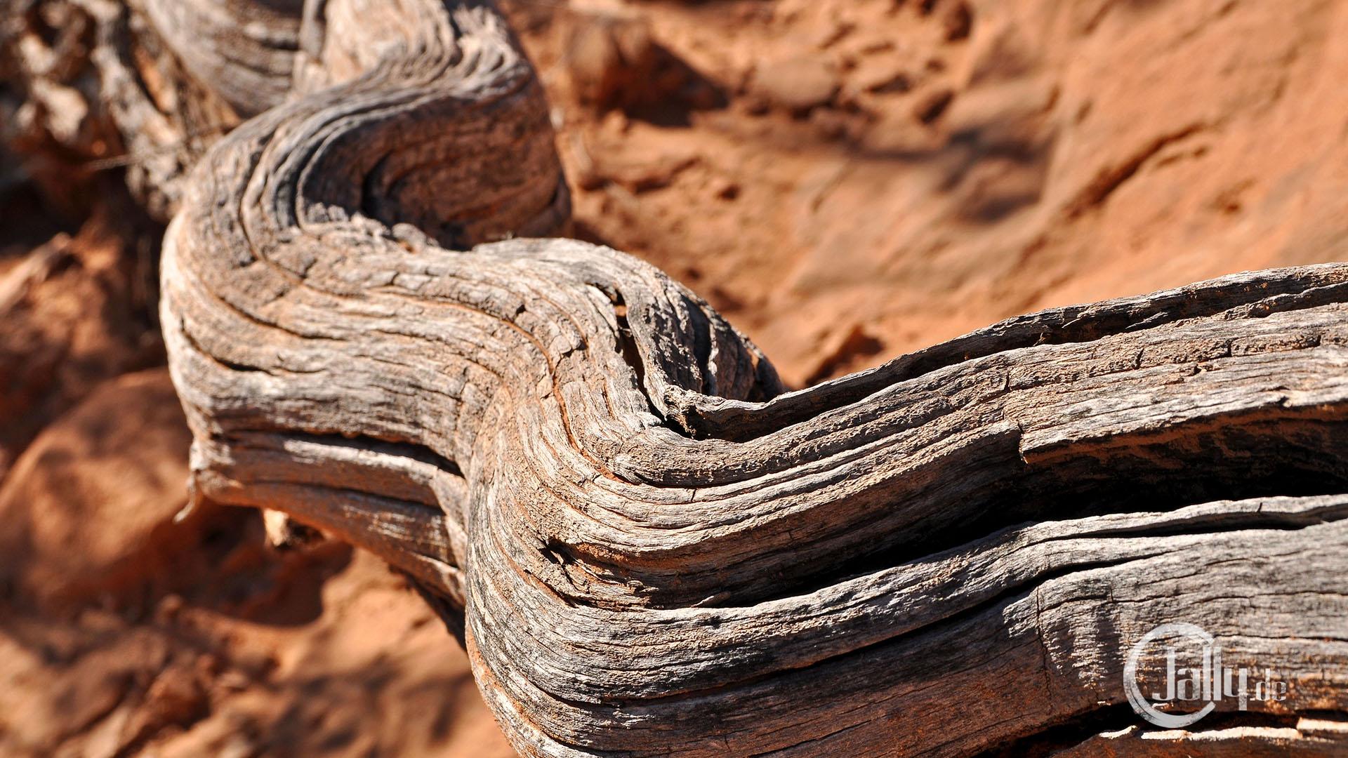 USA / Escalante / Art Dry wood in desert wallpaper
