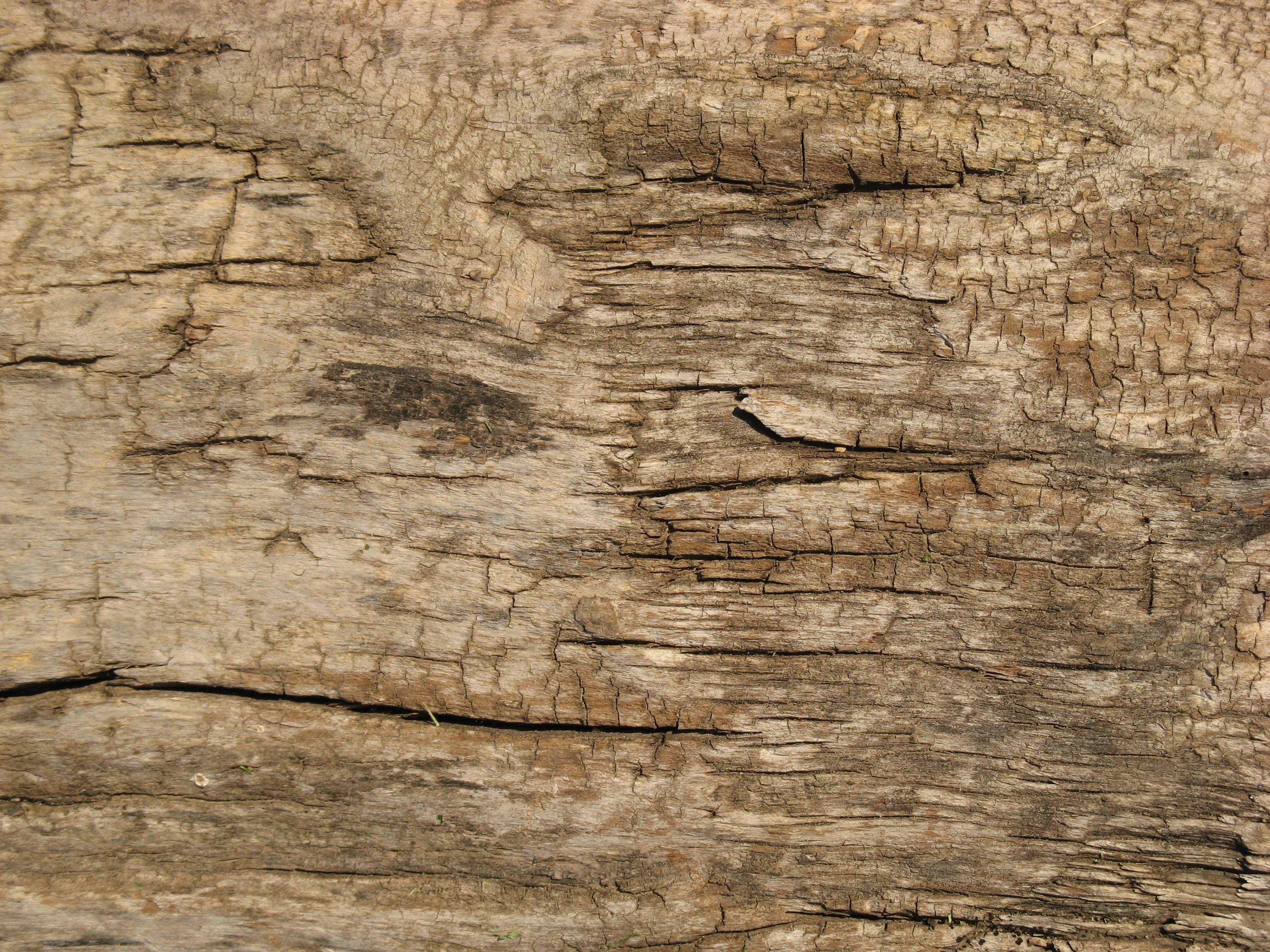 Free Wood texture (dry, crack, trunk)