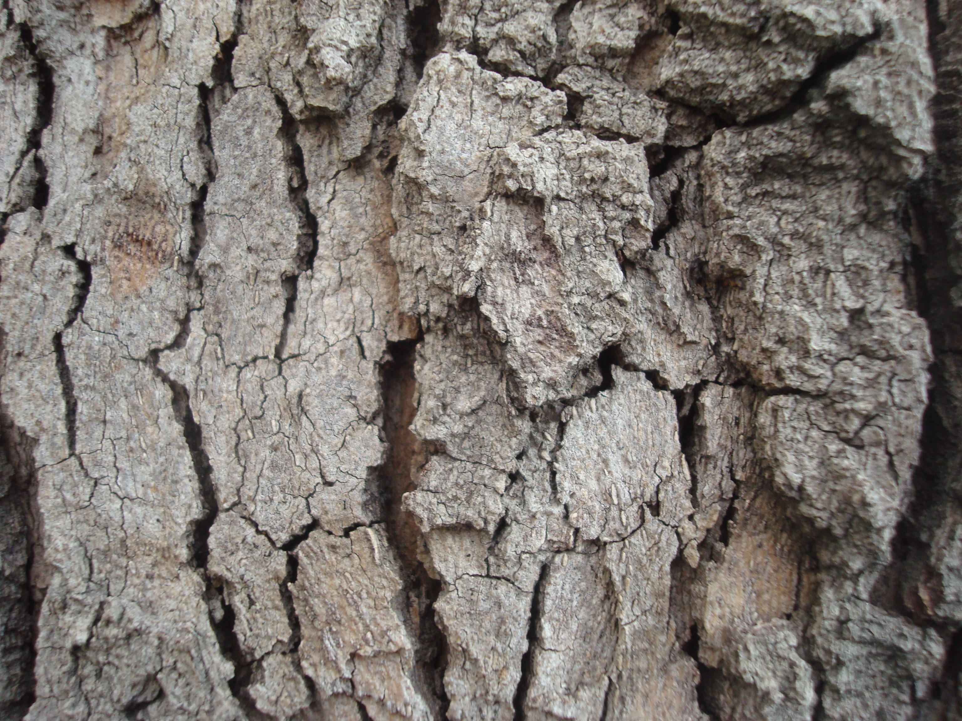 Dry wood texture, Brown, Close-up, Dark, Dry, HQ Photo