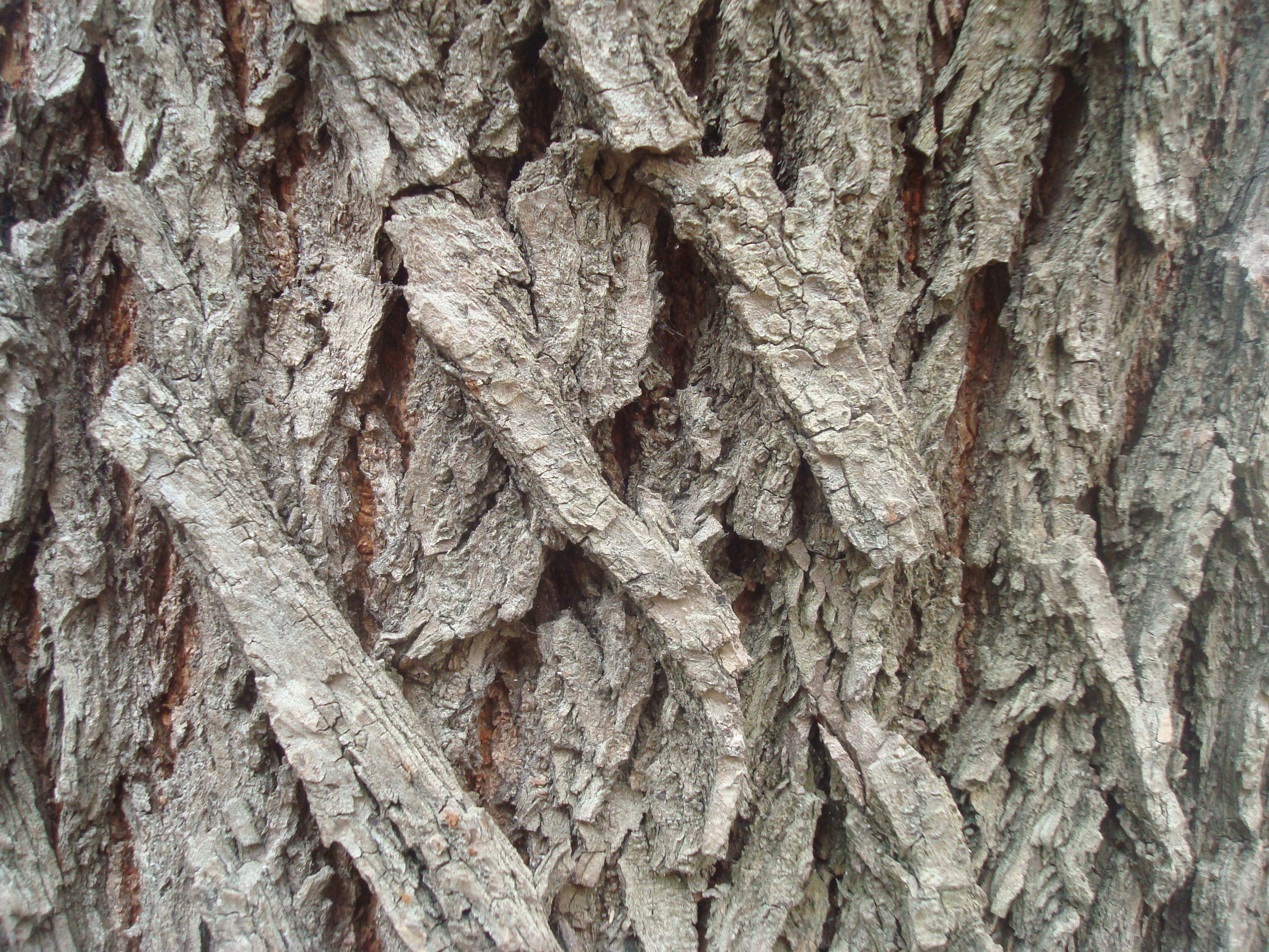 Dry wood texture photo