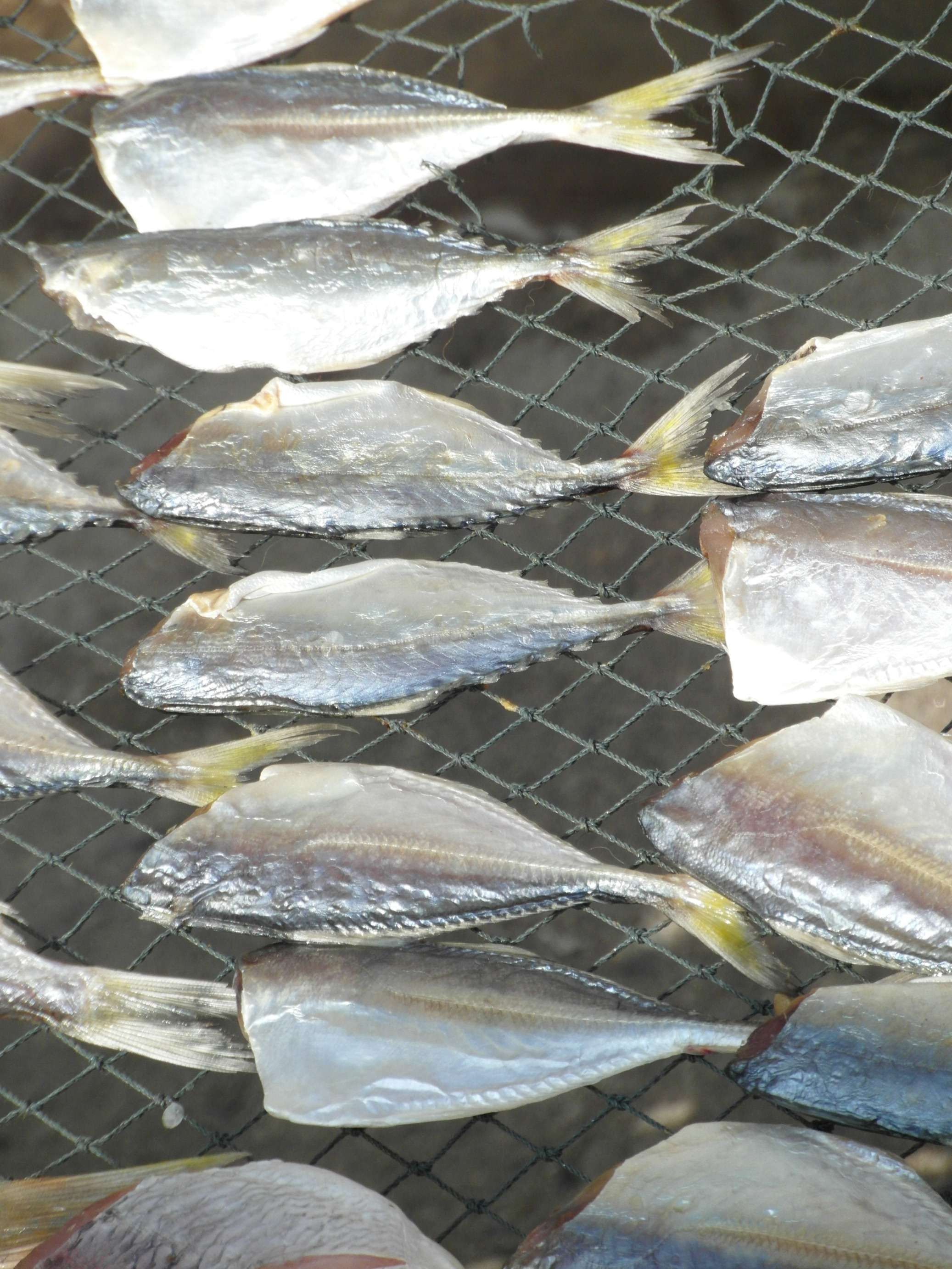 Drying fish photo