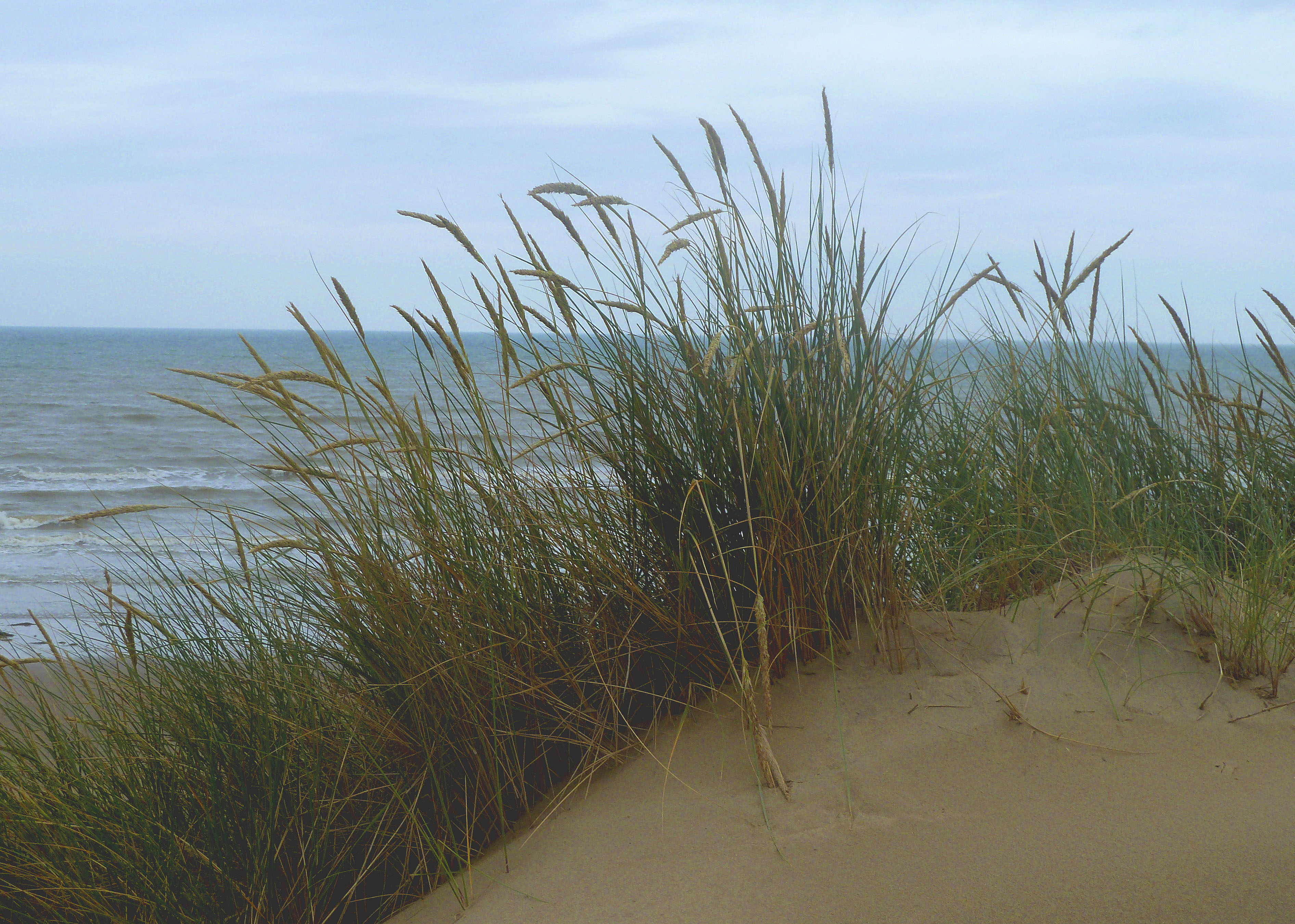 Camber Dunes | Louis' Page