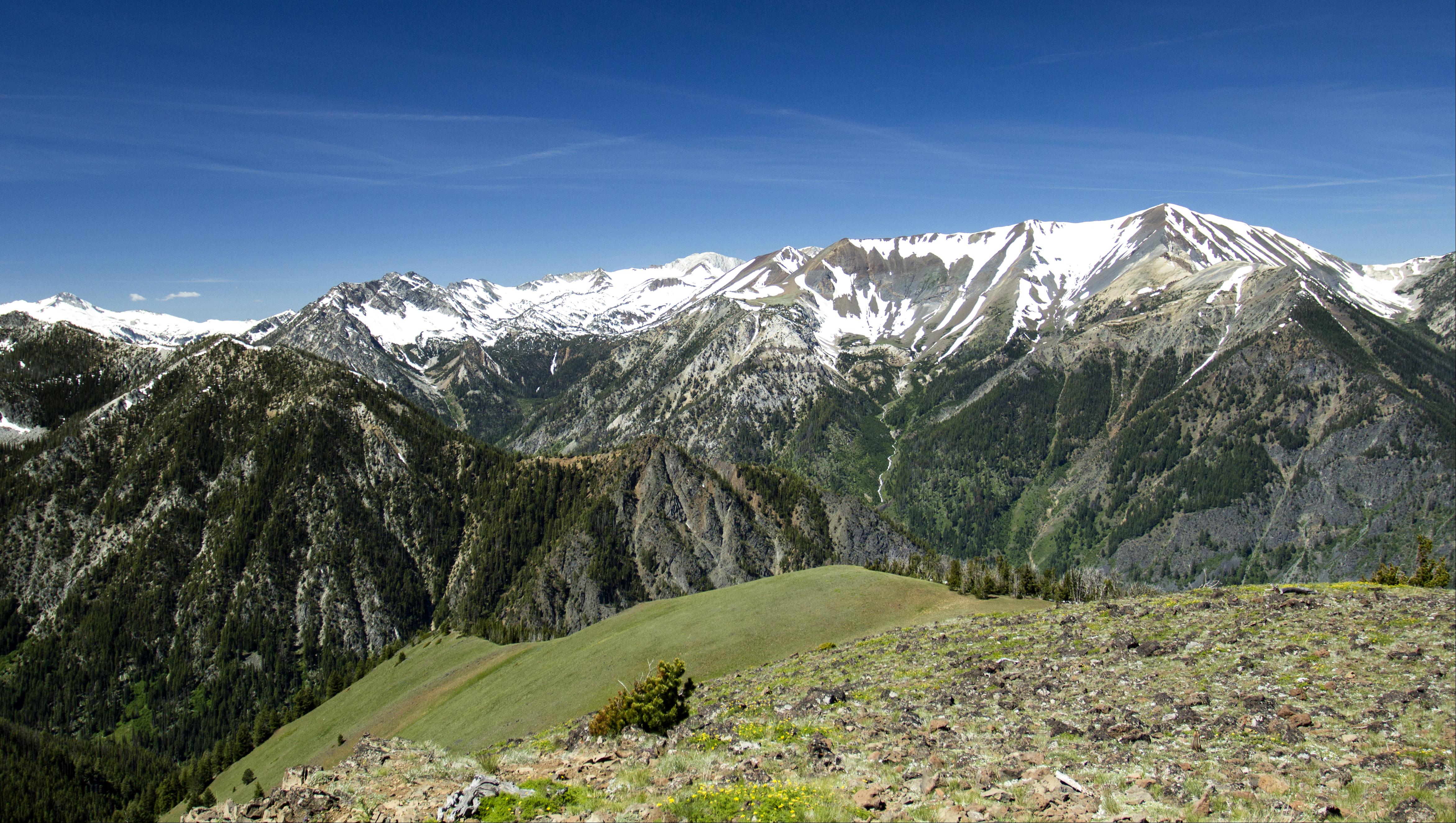 Eagle Cap Wilderness, Oregon, Cap, Oregon, Wildflowers, Wilderness, HQ Photo