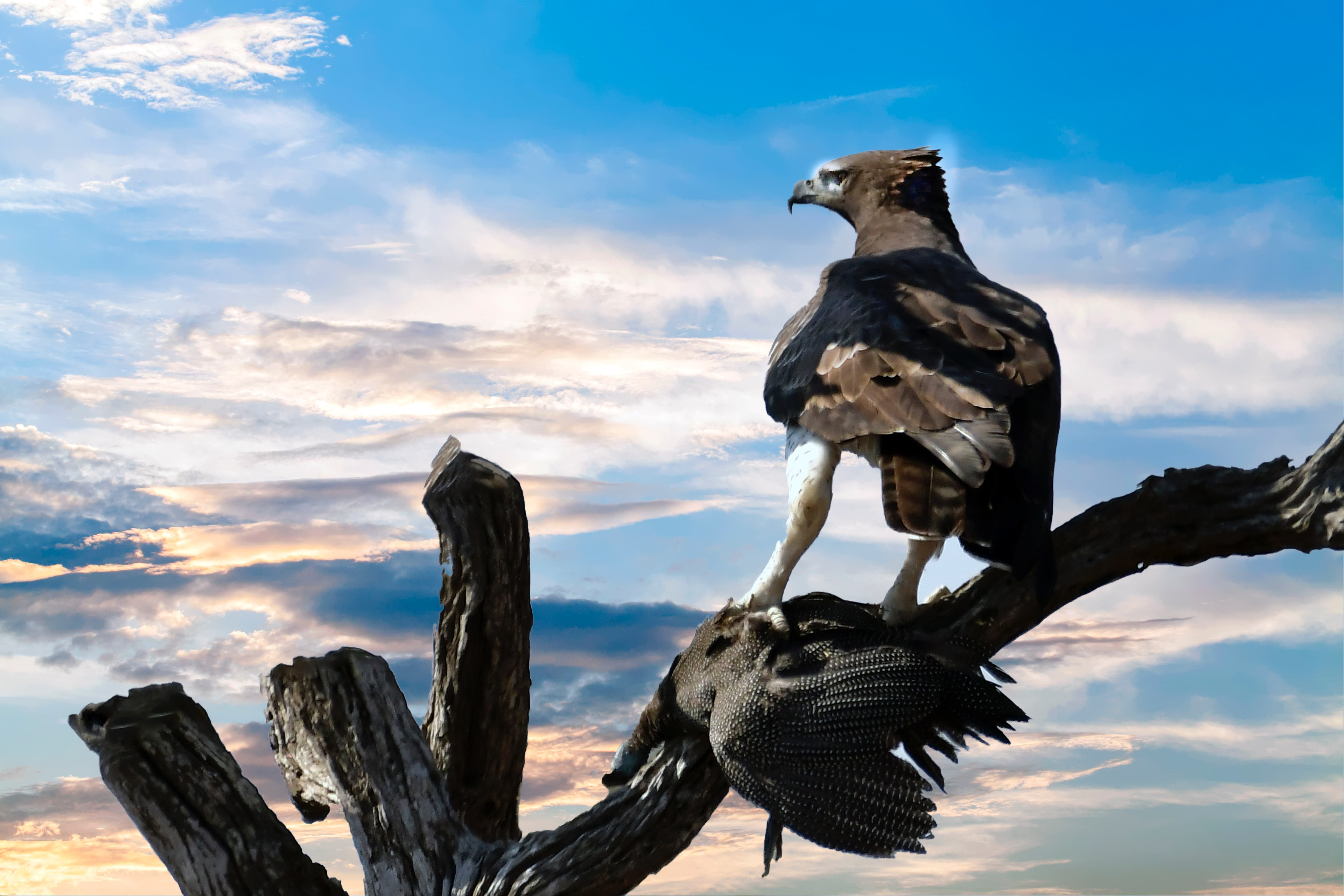 Eagle perched on tree branch photo
