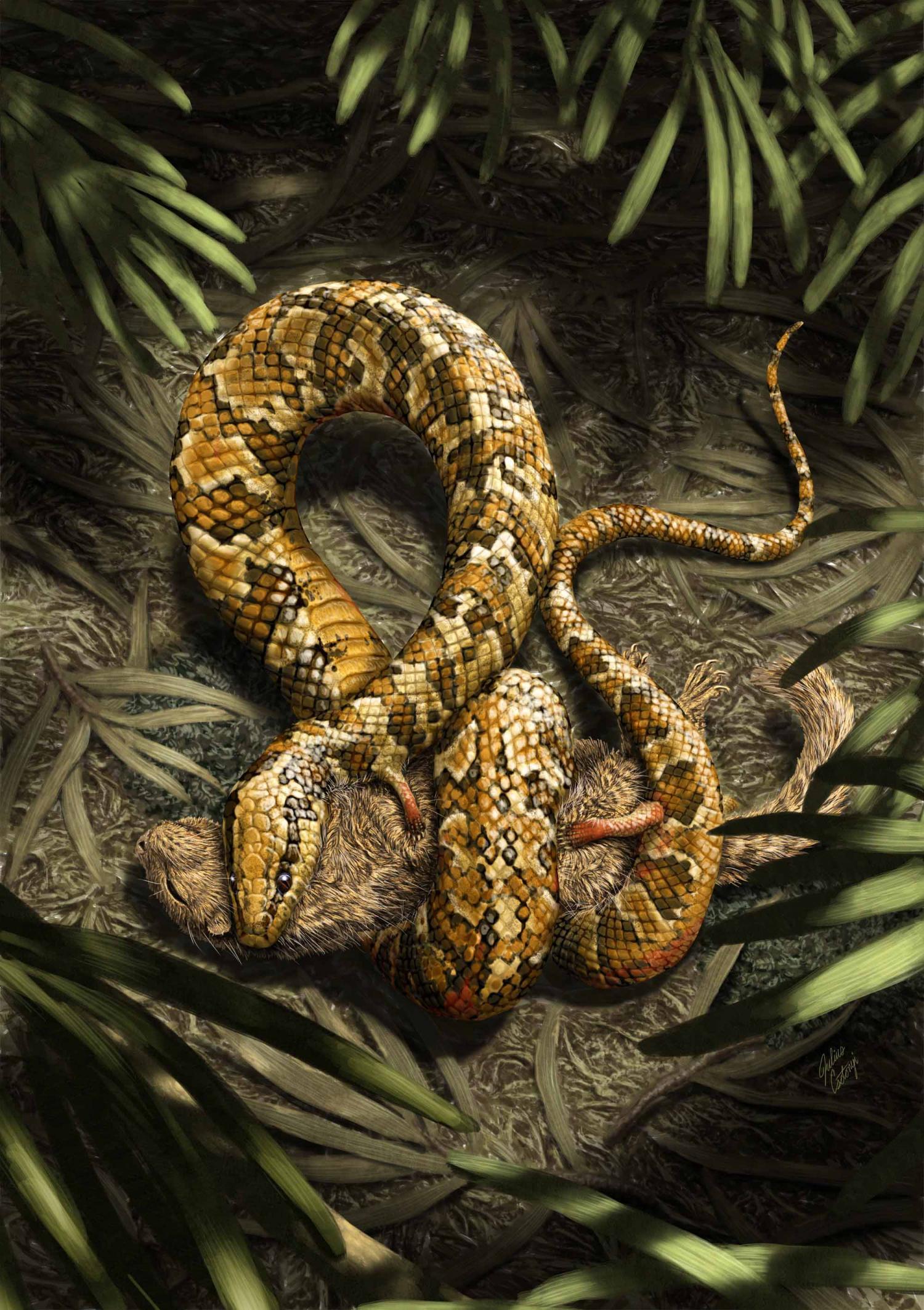 Organic serpent cell photo