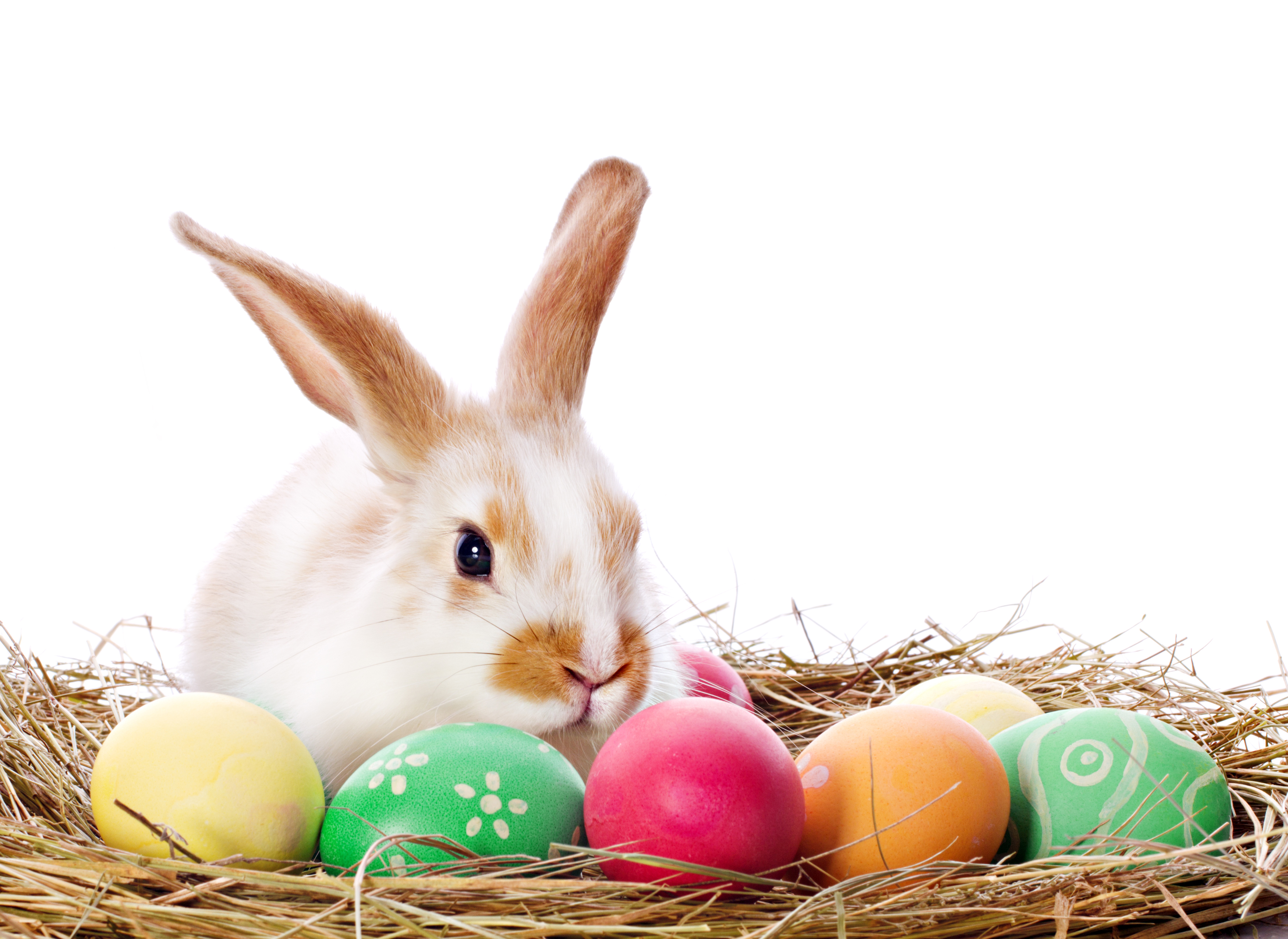 An Open Letter to the Easter Bunny – peterpilt