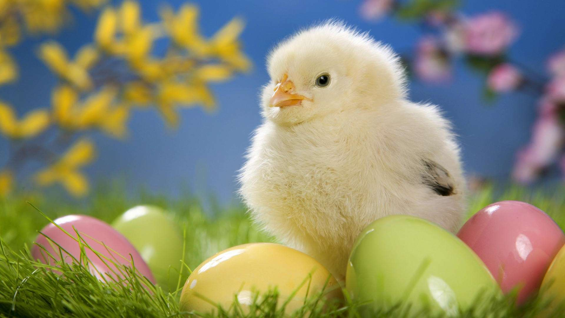 Cute Easter Chick with Eggs HD Wallpaper » FullHDWpp - Full HD ...