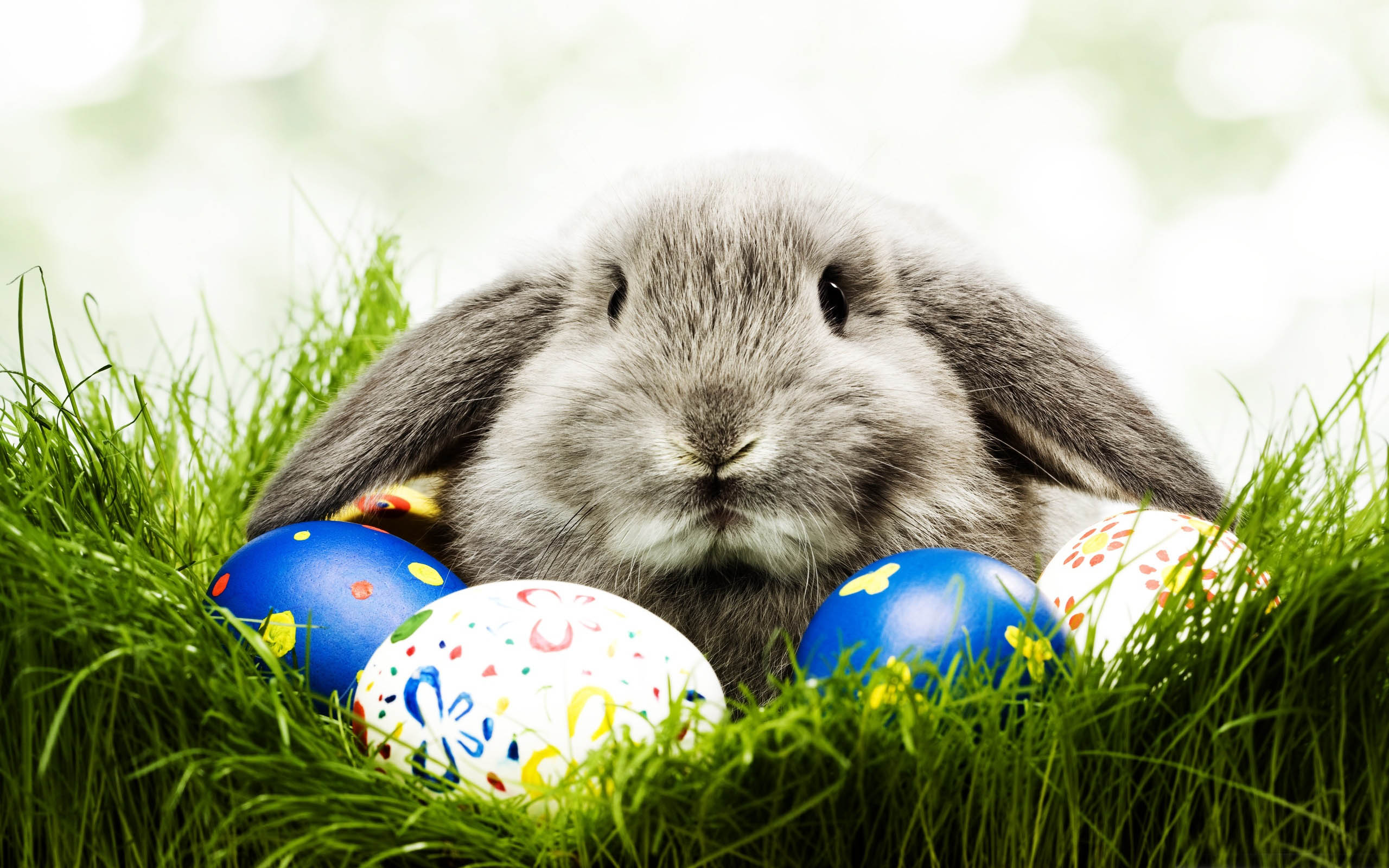 A Real Easter Bunny Comes With Real Consequences