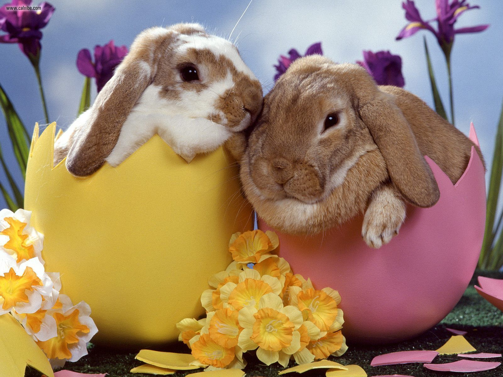 The Easter Bunny | Fascinating Animals