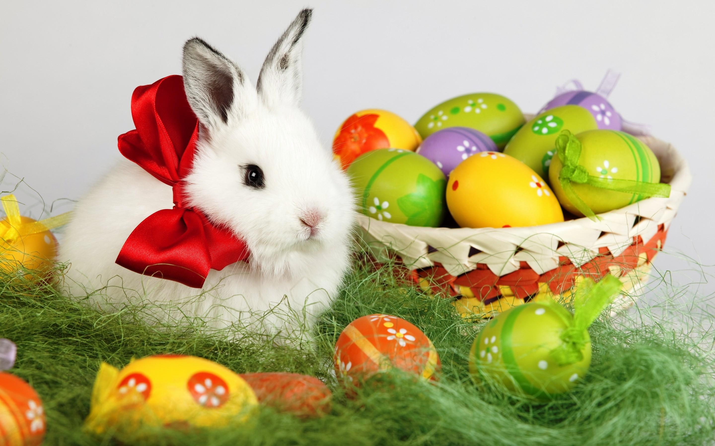 Easter-Rabbit-1.jpg