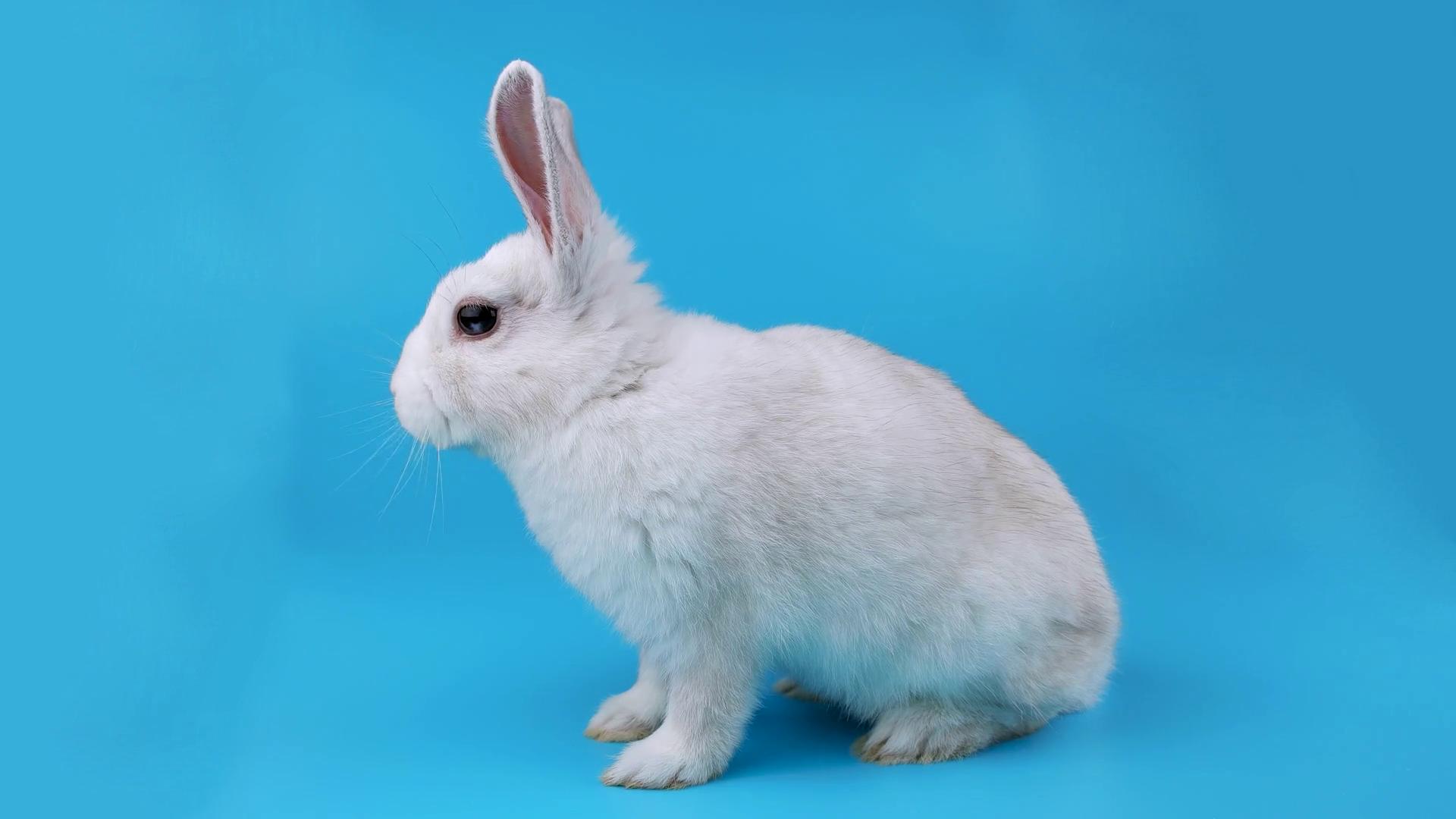 Easter rabbit sideways photo