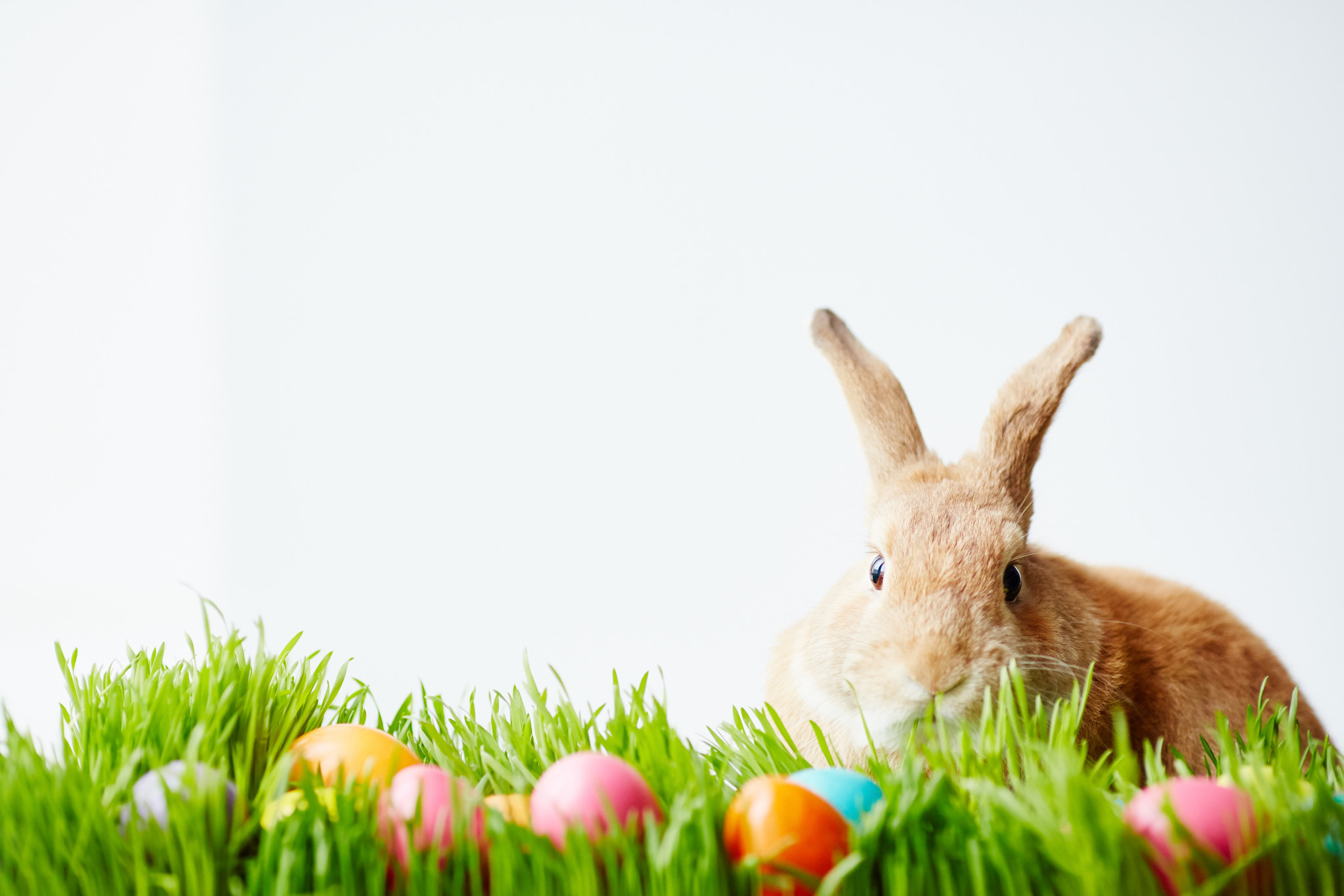 Don't get a rabbit just because it's Easter - Chicago Tribune