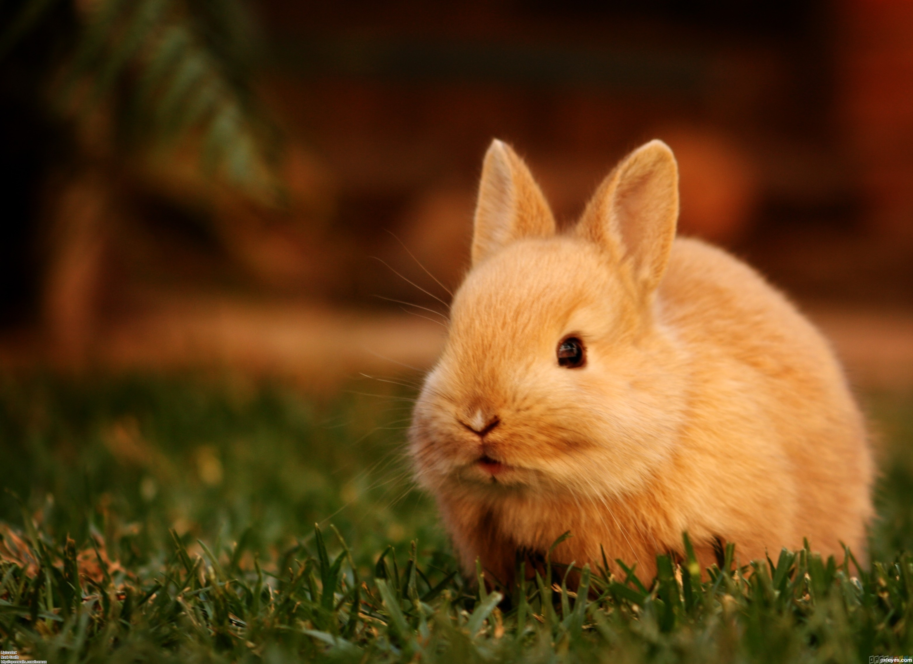 Sweet little bunny - close up