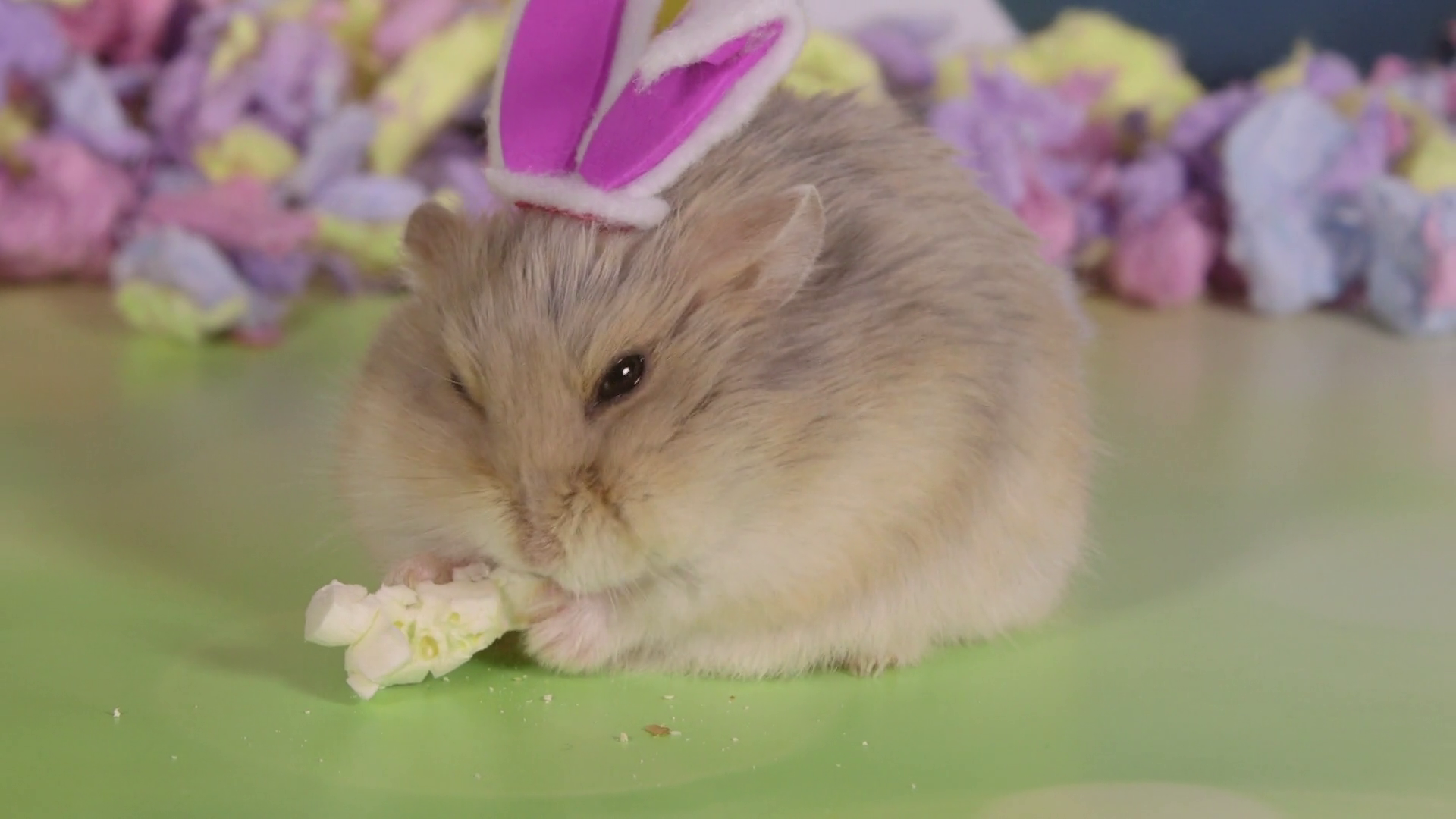 Hamster Closeup Wearing Easter Bunny Ears Side View Stock Video ...