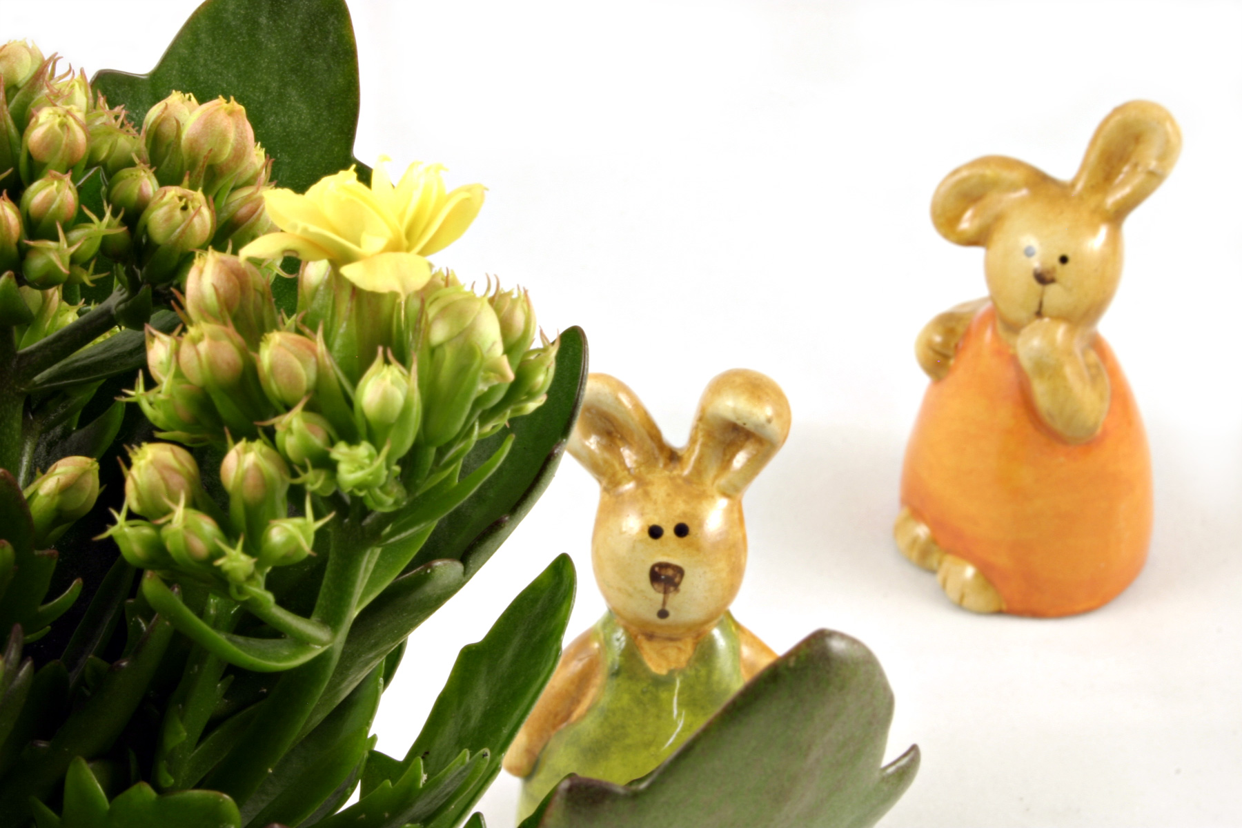 Easter rabbits looking at a flower photo