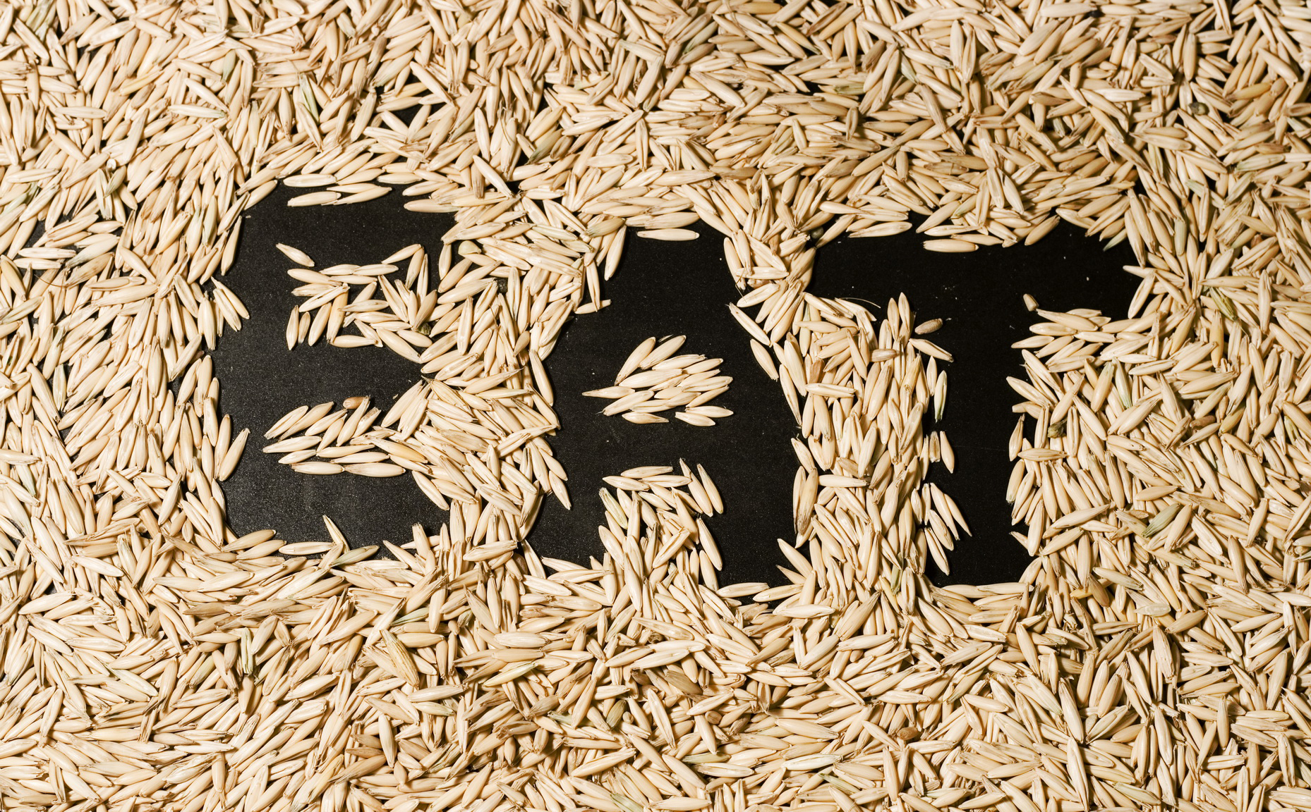 Eat grains photo