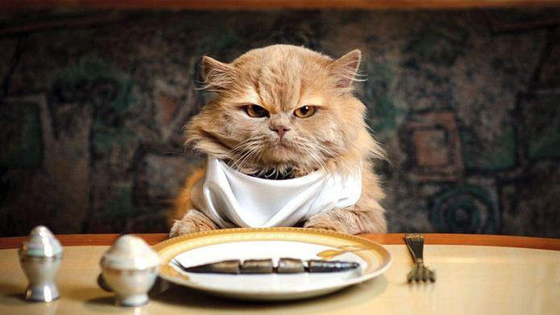 Eating cat photo