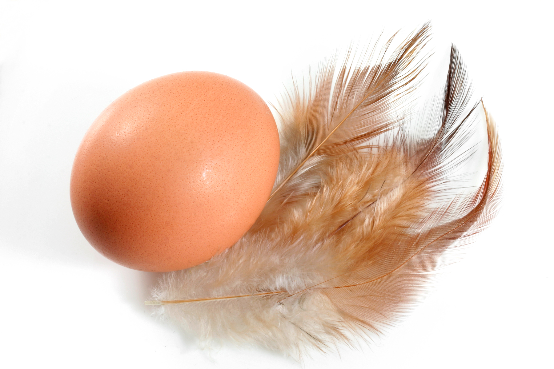 Egg and Feathers, Avian, Organic, Isolated, Isolation, HQ Photo