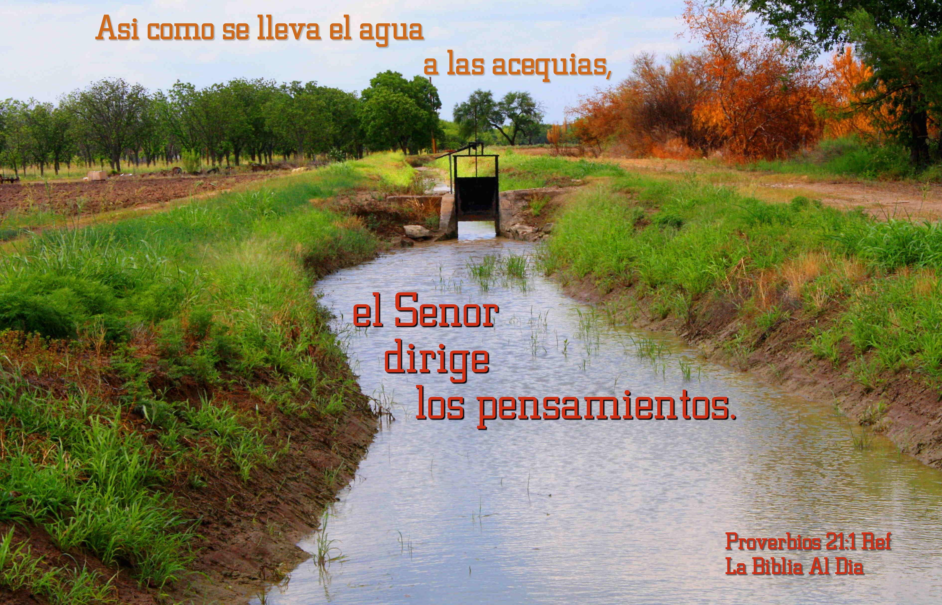 El Senor Dirige Los Pensamientos, Autumn, Bible, Creek, Fall, HQ Photo