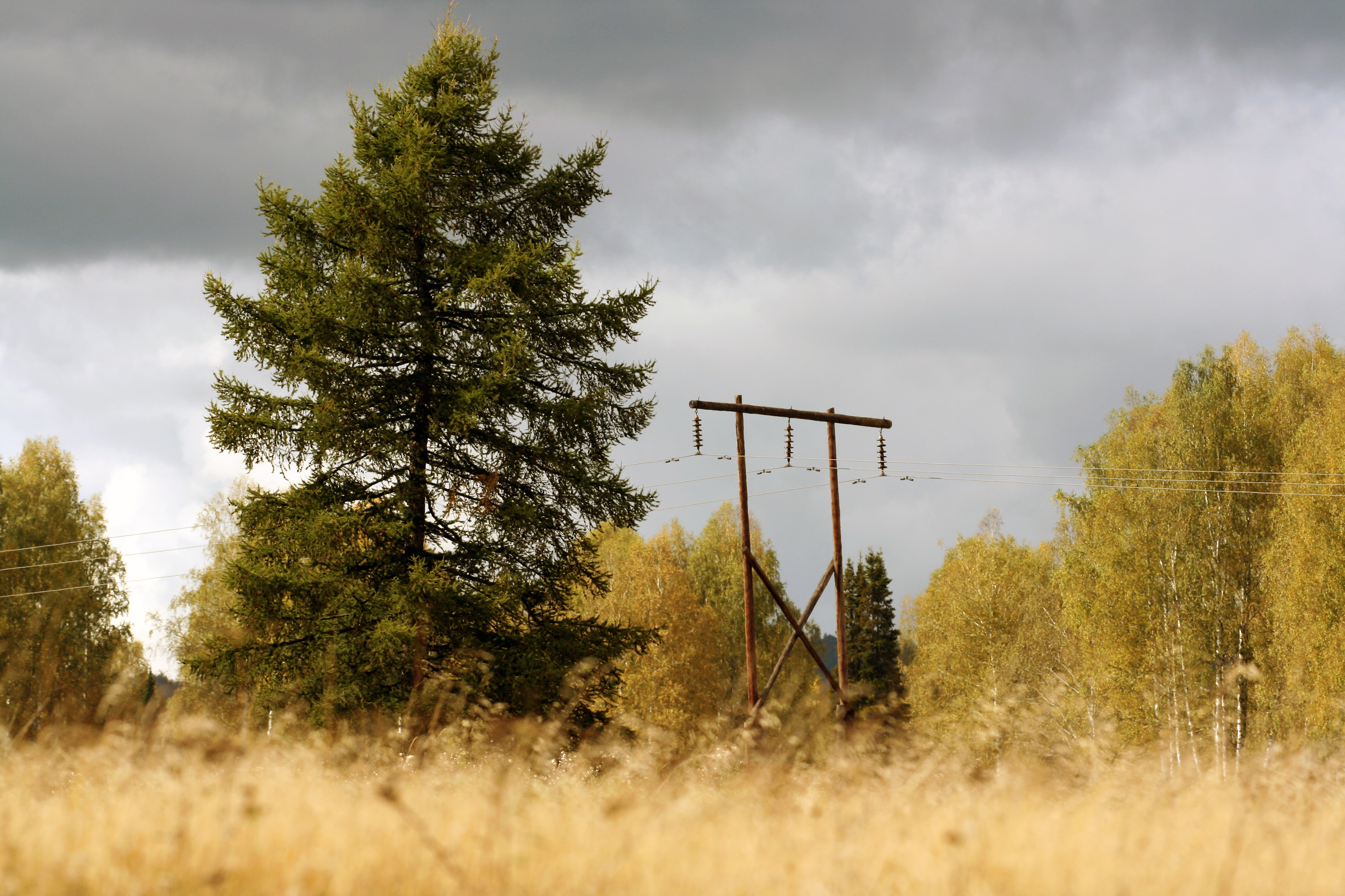 electricity post in autumn forest, Autumn, Wooden, Wood, Powerlines, HQ Photo