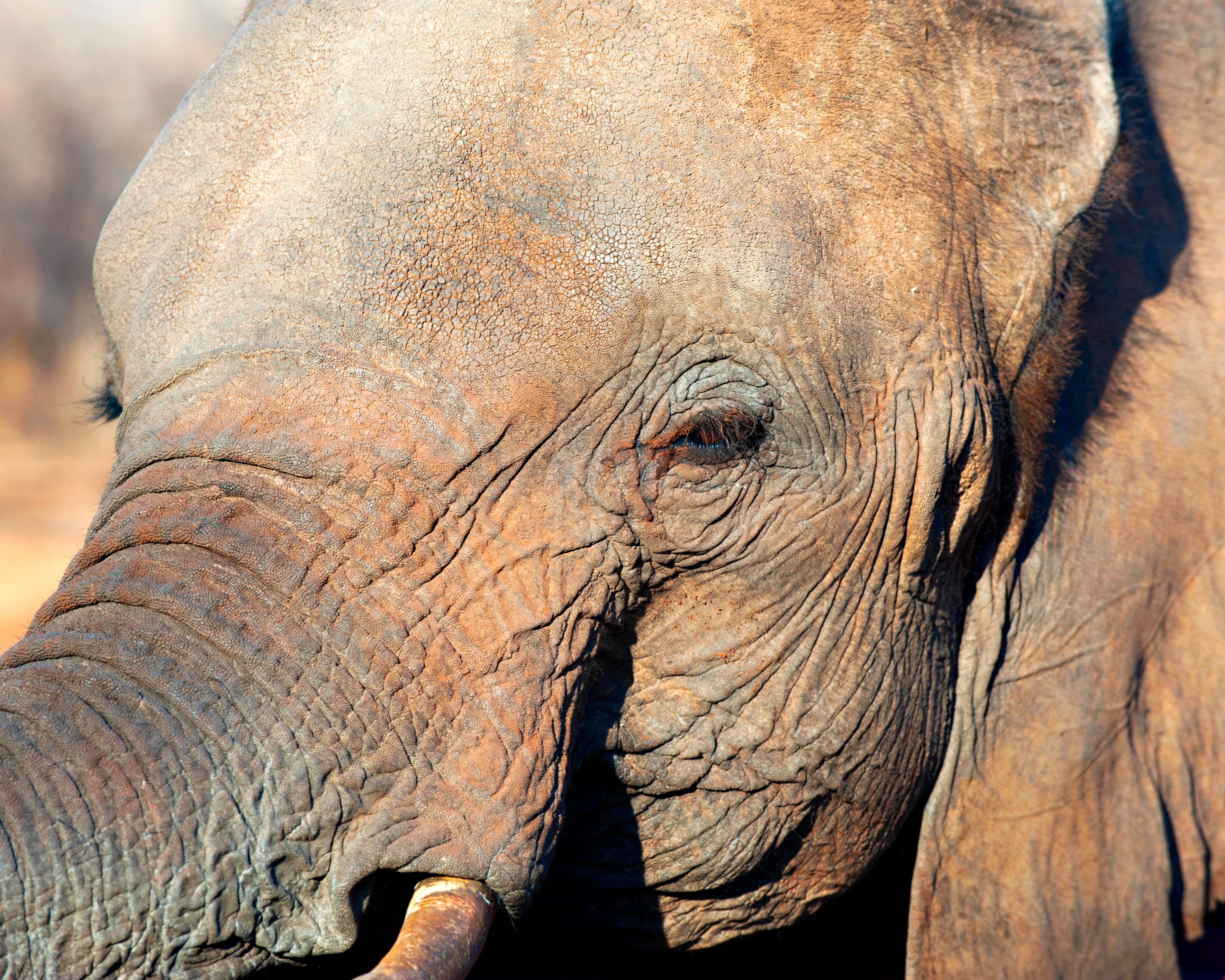 Elephant, Animal, Big, Fat, Giant, HQ Photo