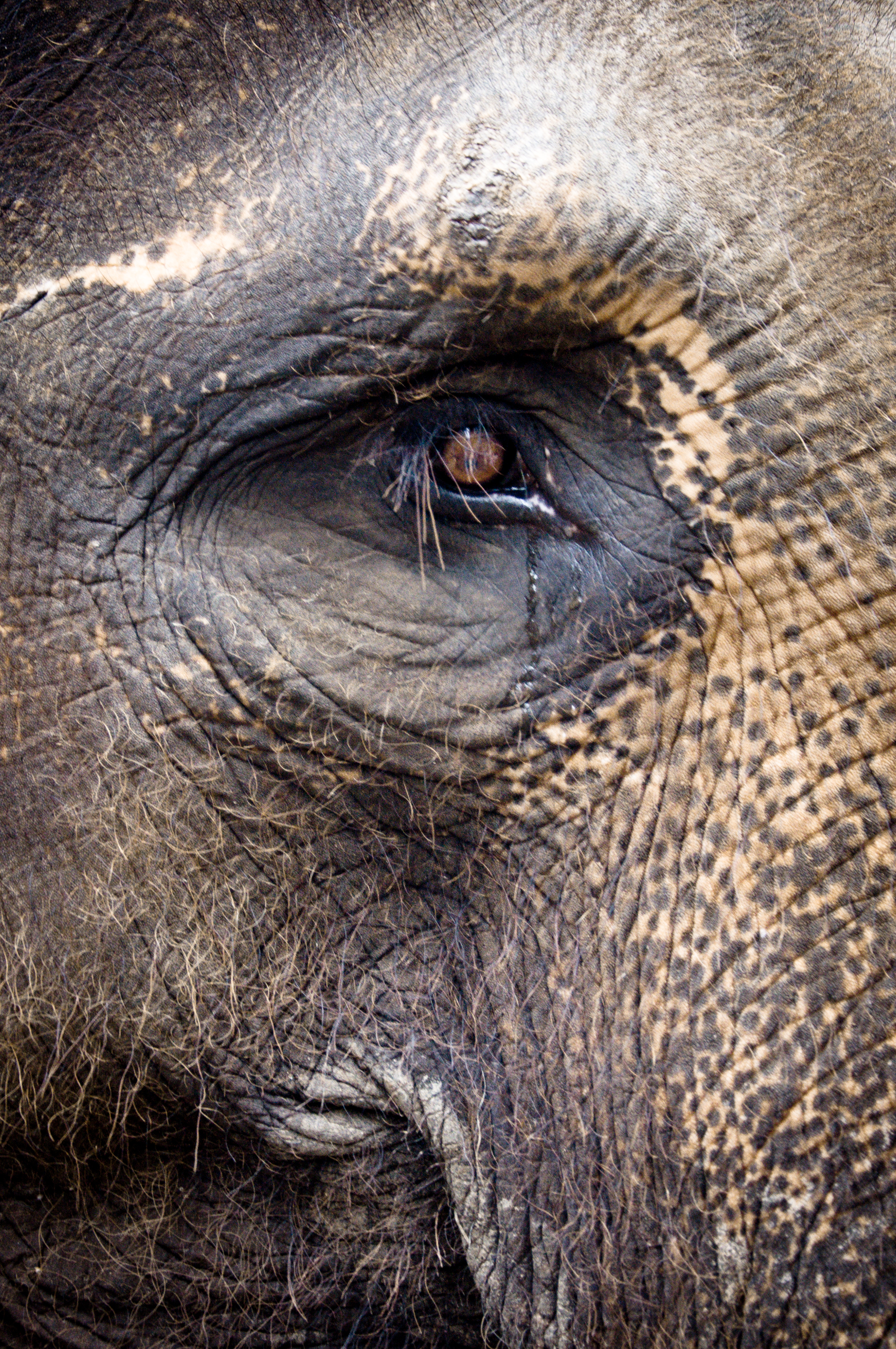 Elephant, Animal, Staring, Skin, Portrait, HQ Photo