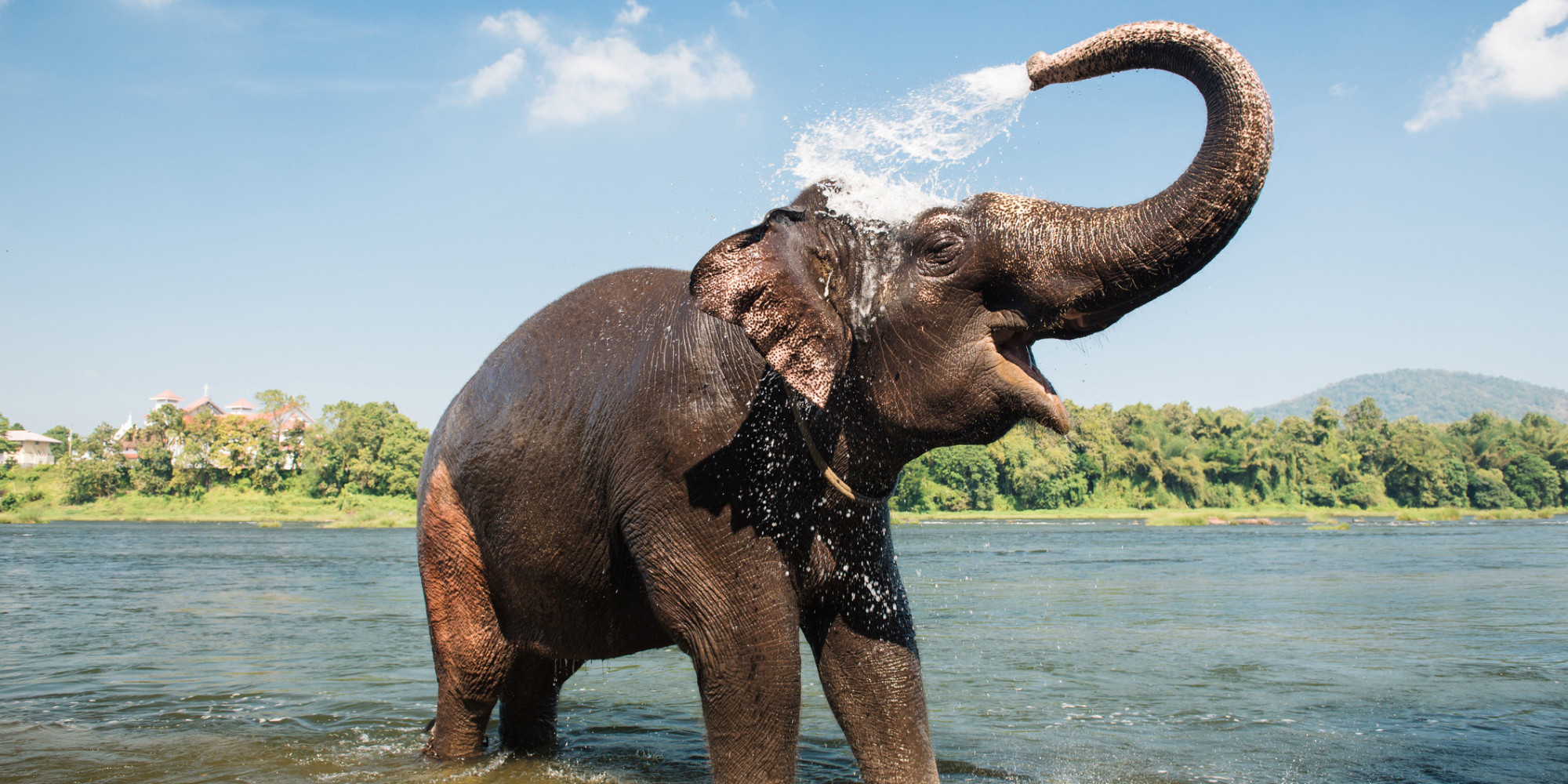 15 Things You Didn't Know About Elephants | Her Campus