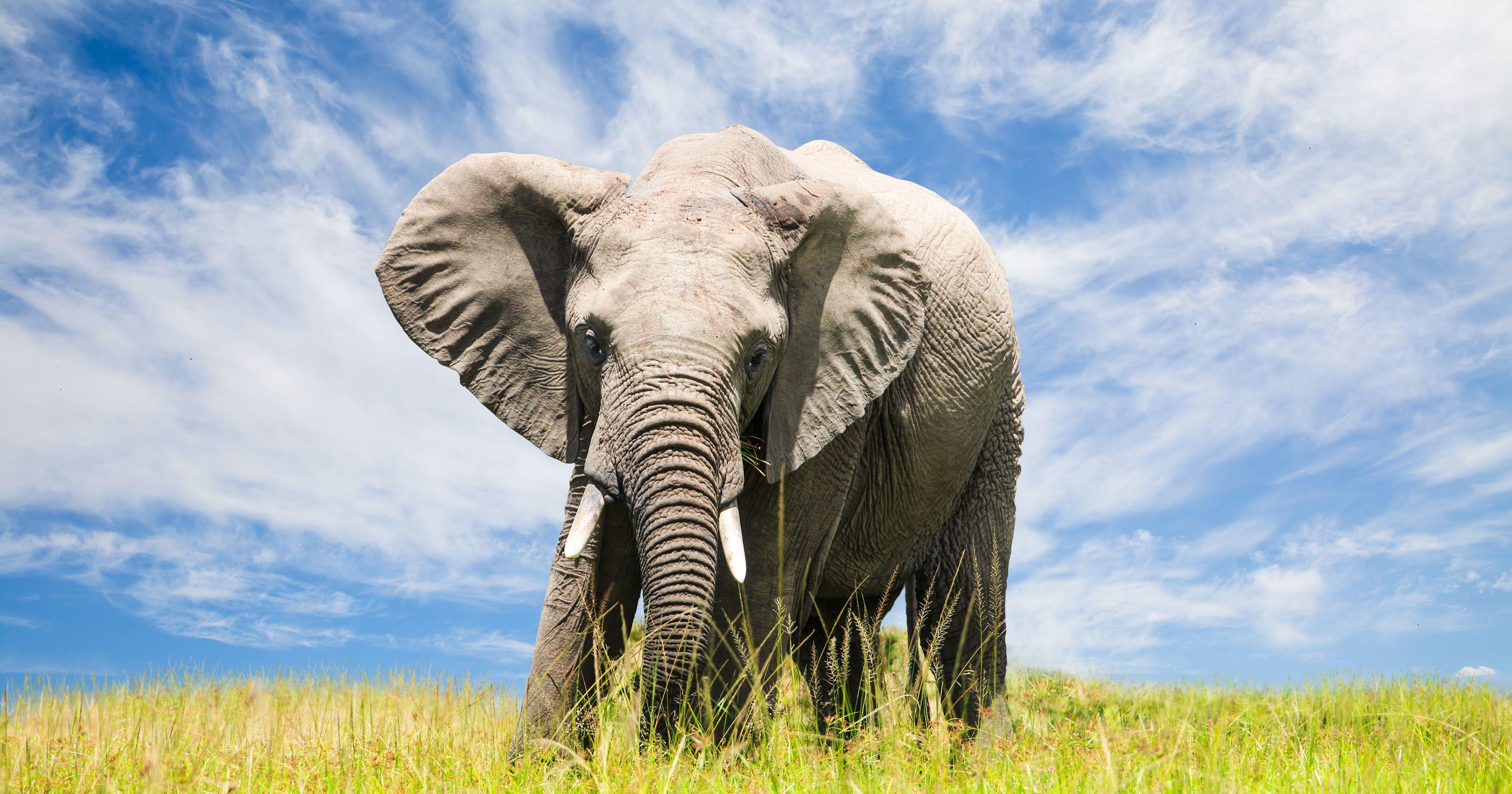 African elephants escape Georgia tractor-trailer fire