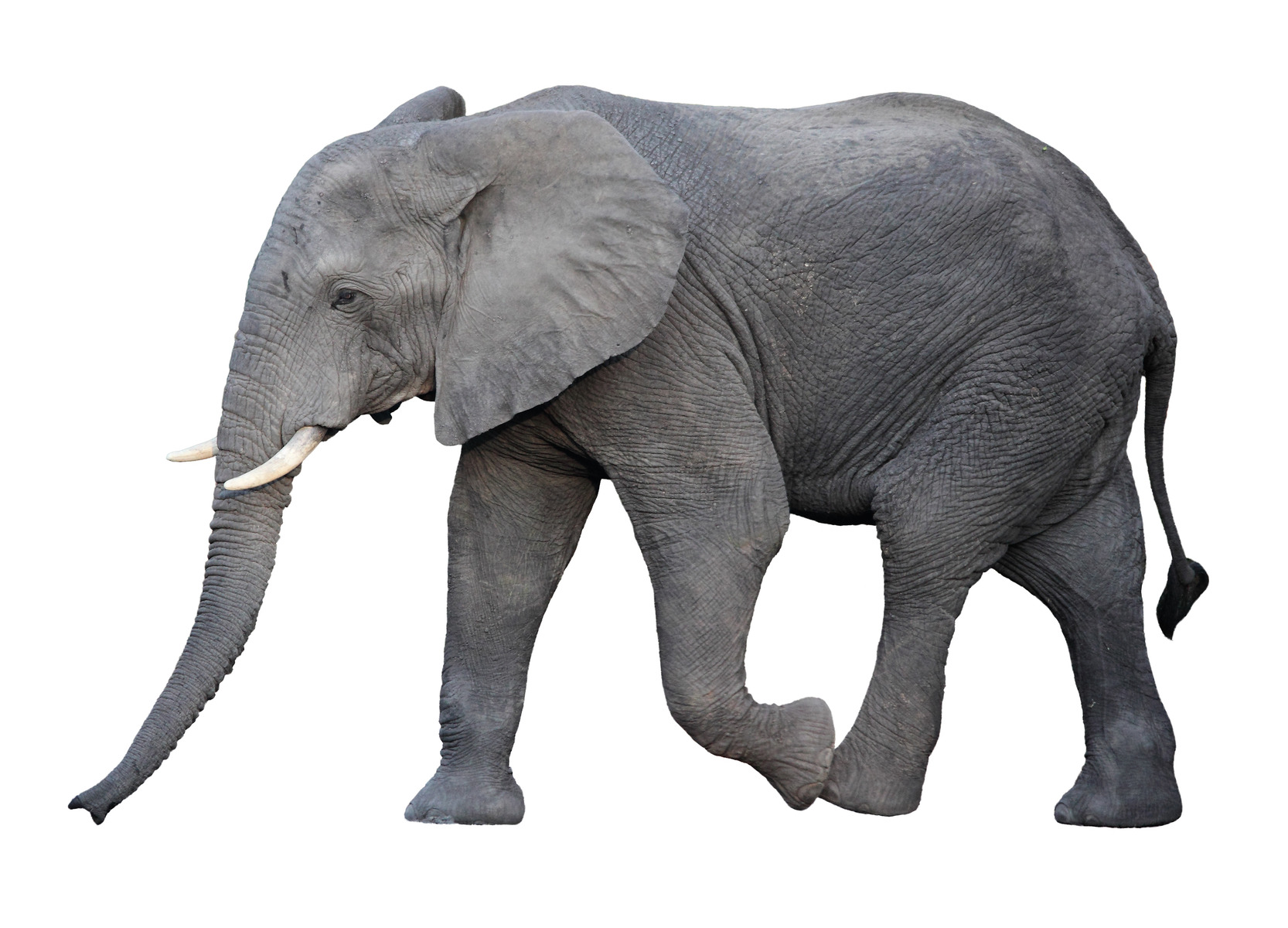 E is for Elephant–A to Z Blog Challenge – Story Crossroads