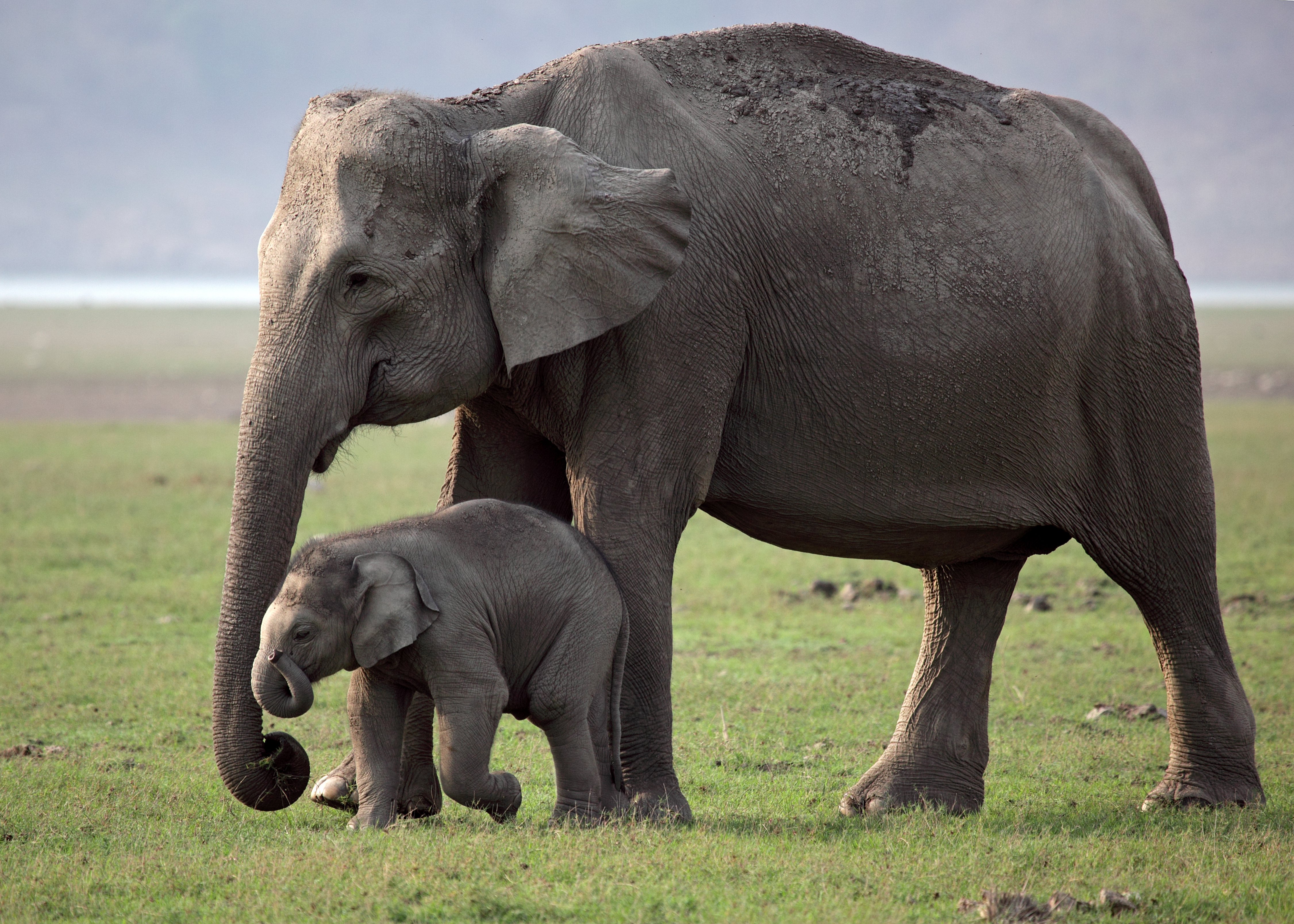 About Us | Who We Are | Elephant Family