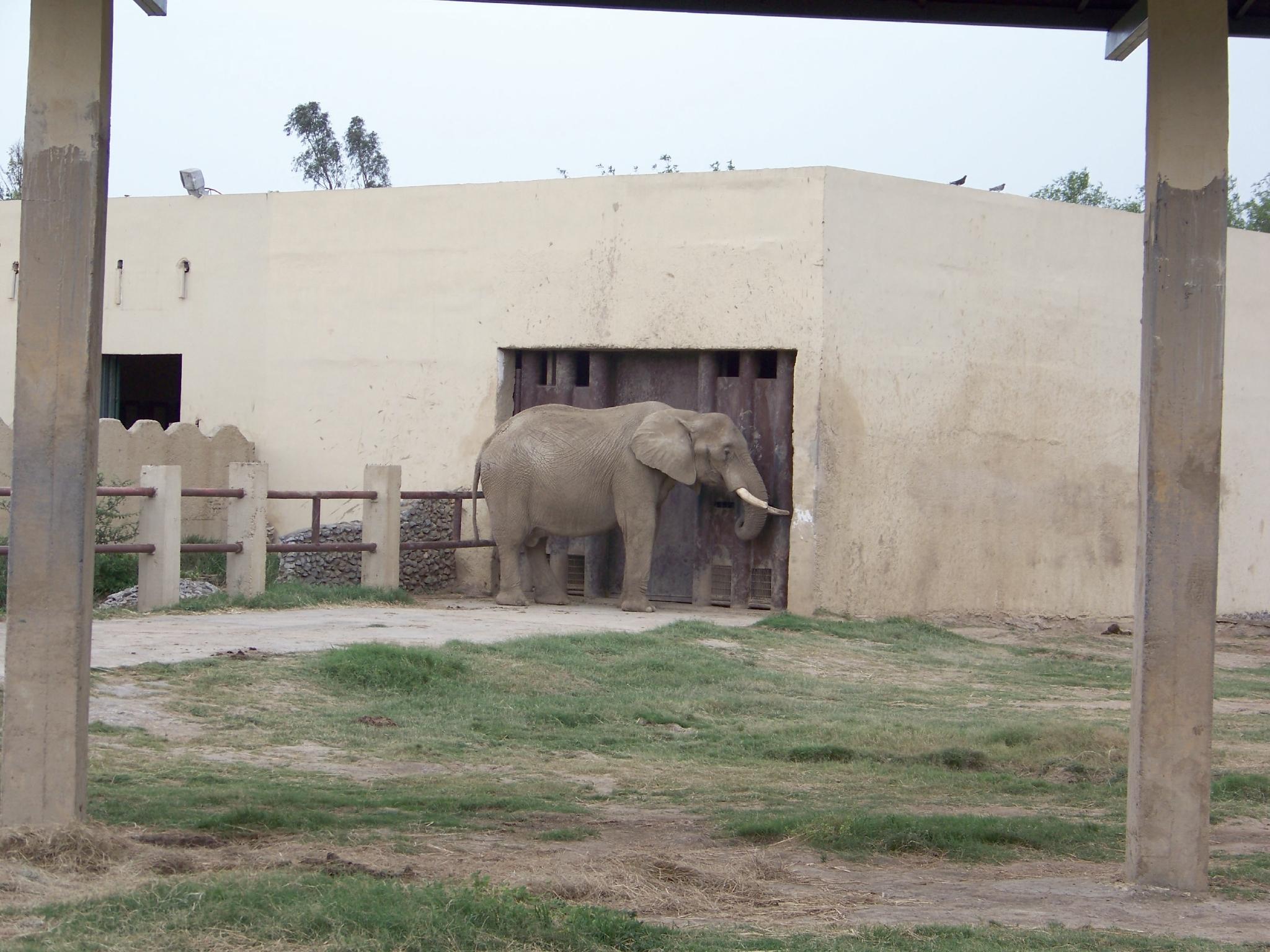 Elephant, Africa, Power, Ivory, Large, HQ Photo