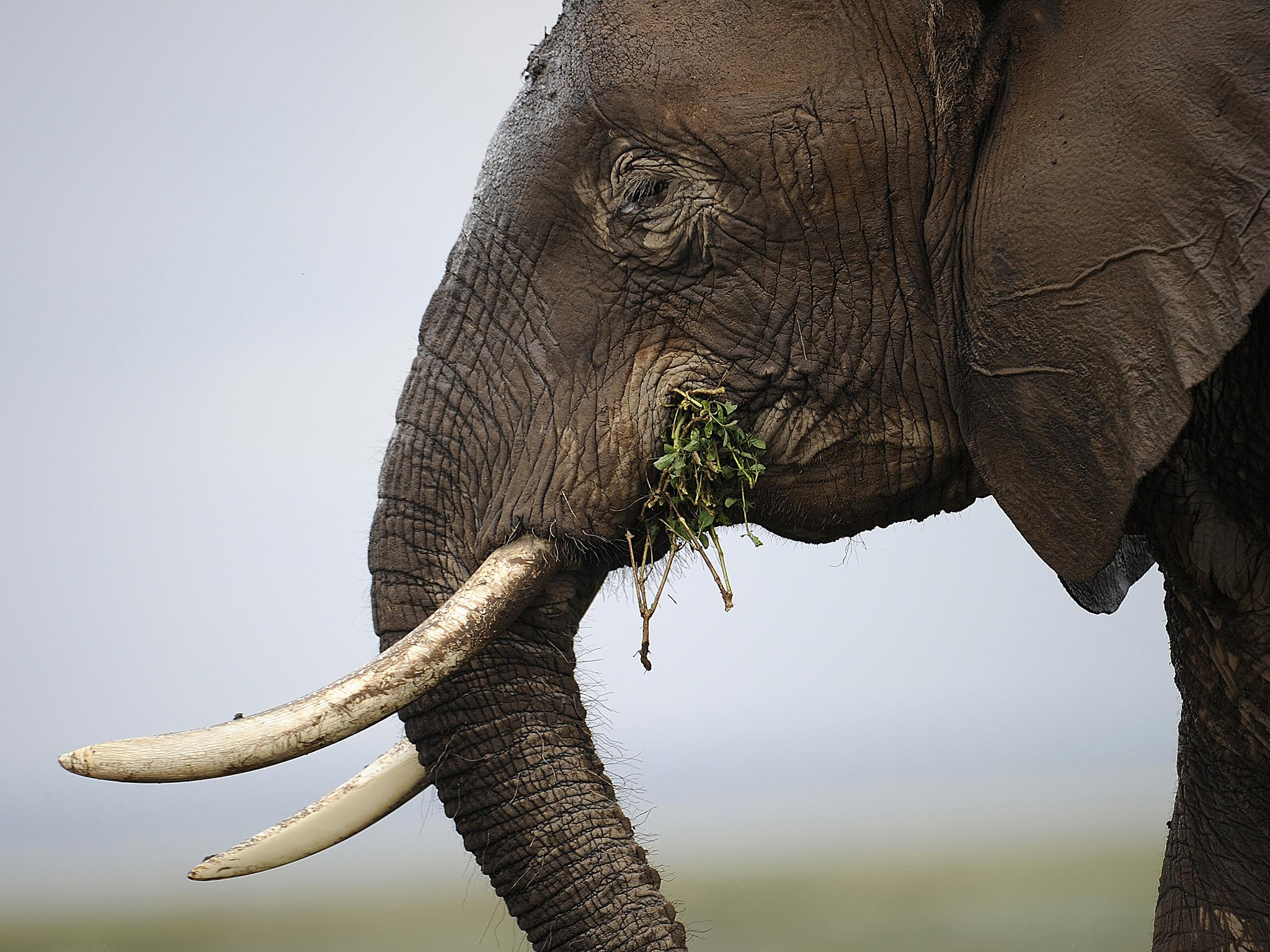 Science news in brief: elephants fear bees and an effective way of ...