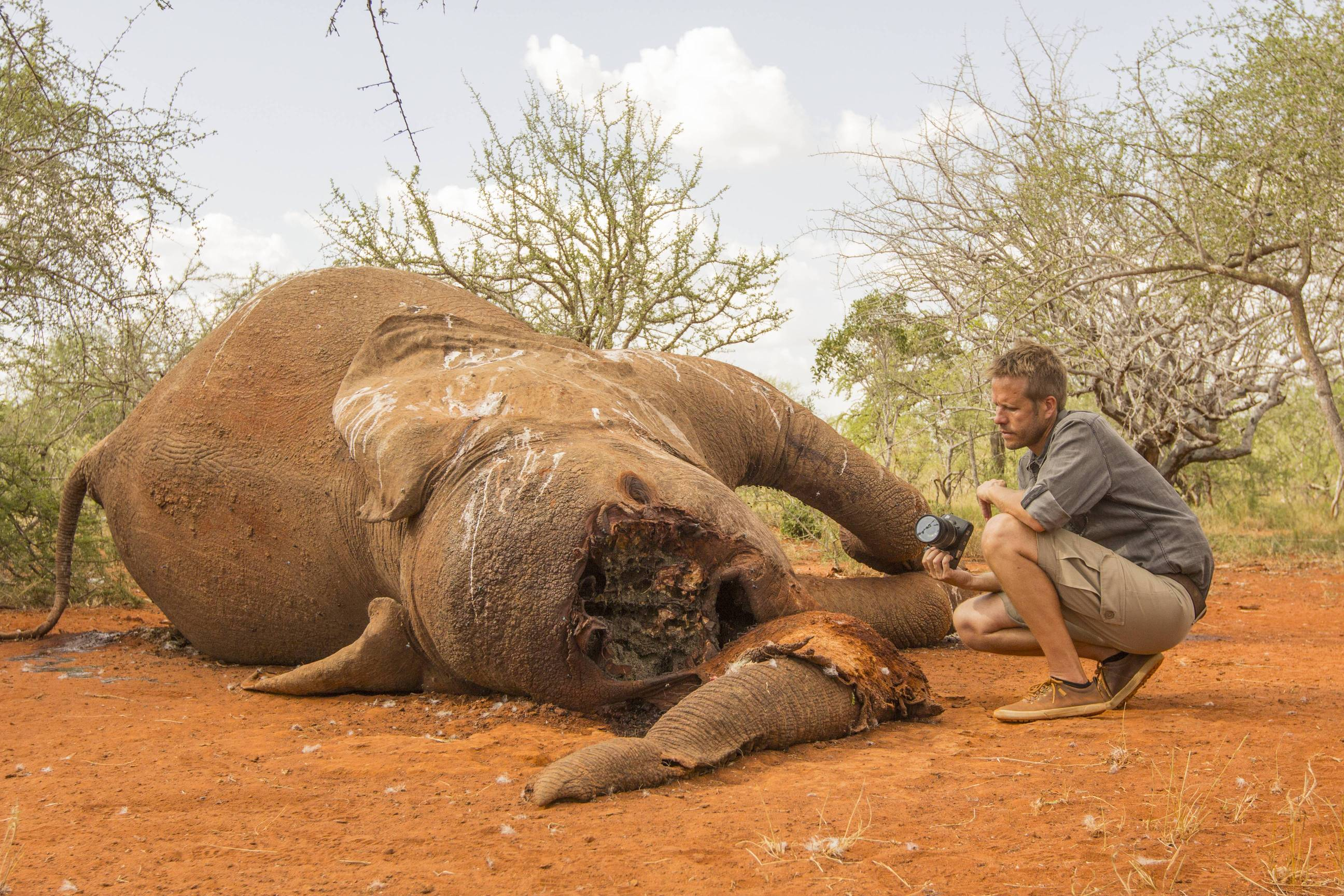 Top 97 Elephant - HD Animal Spot
