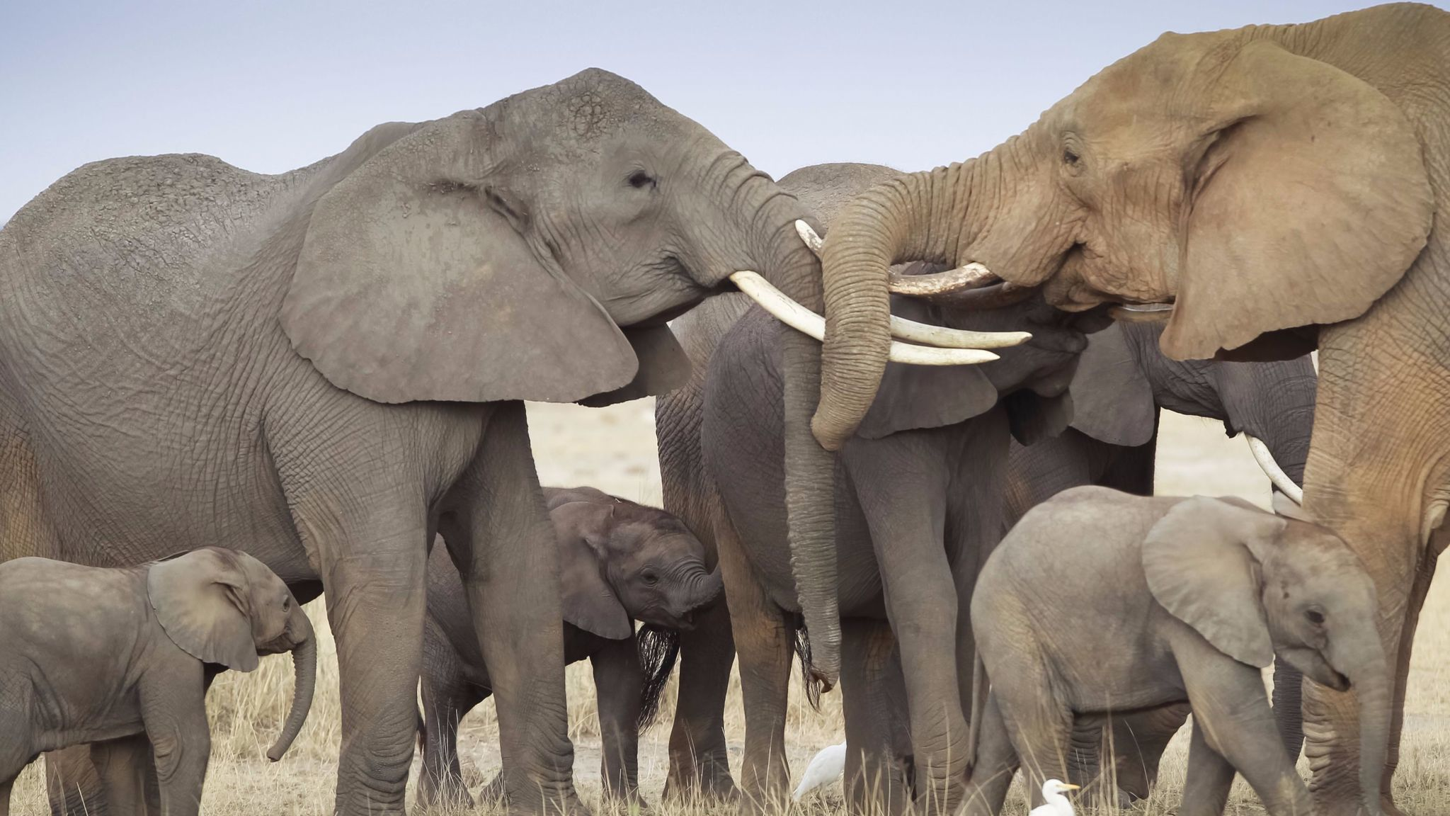 Why would any decent person want to kill an elephant?